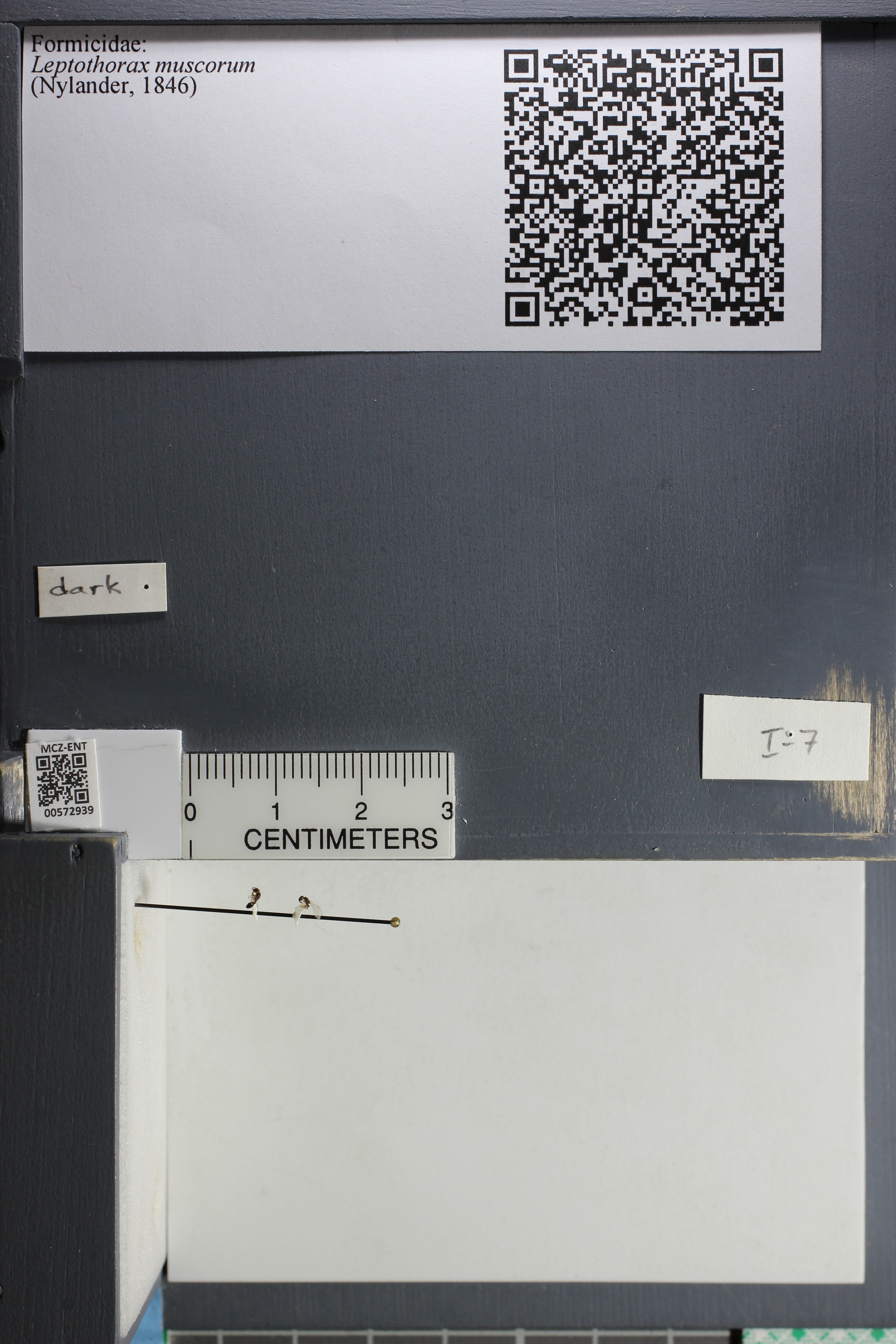 http://mczbase.mcz.harvard.edu/specimen_images/ent-formicidae/datashot/2015_08_12/IMG_334740.JPG