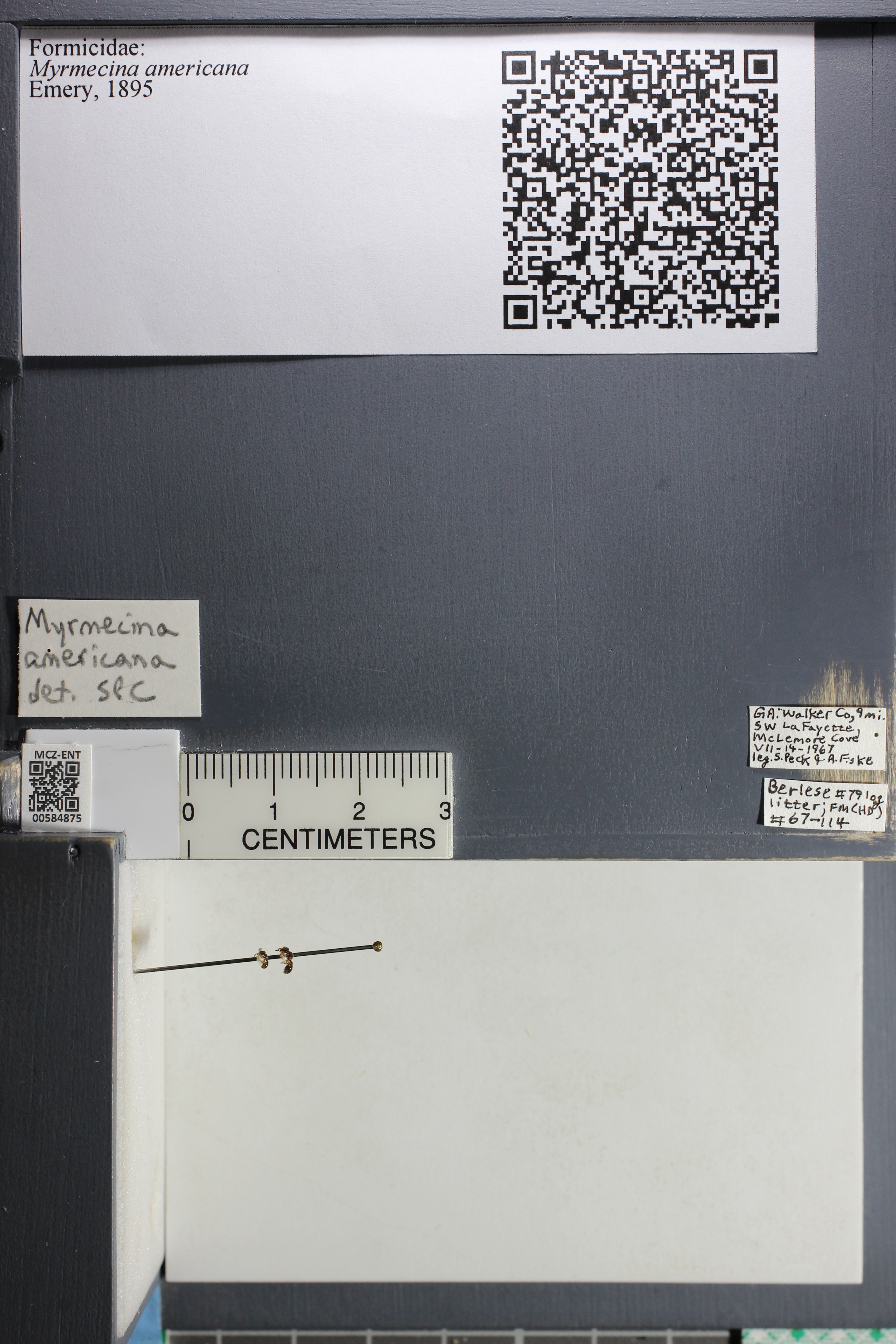 http://mczbase.mcz.harvard.edu/specimen_images/ent-formicidae/datashot/2015_10_27/IMG_339066.JPG