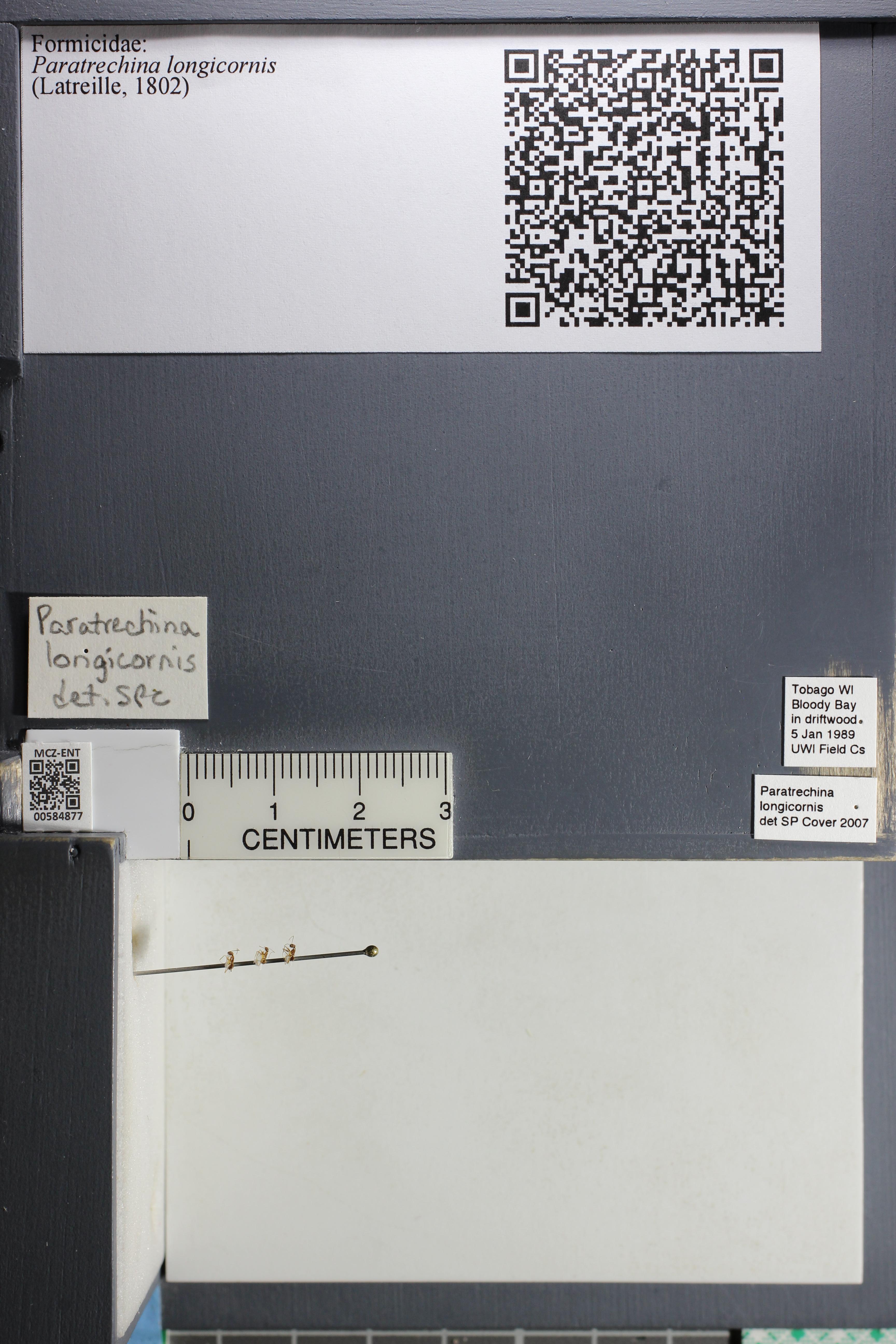 http://mczbase.mcz.harvard.edu/specimen_images/ent-formicidae/datashot/2015_10_27/IMG_339068.JPG