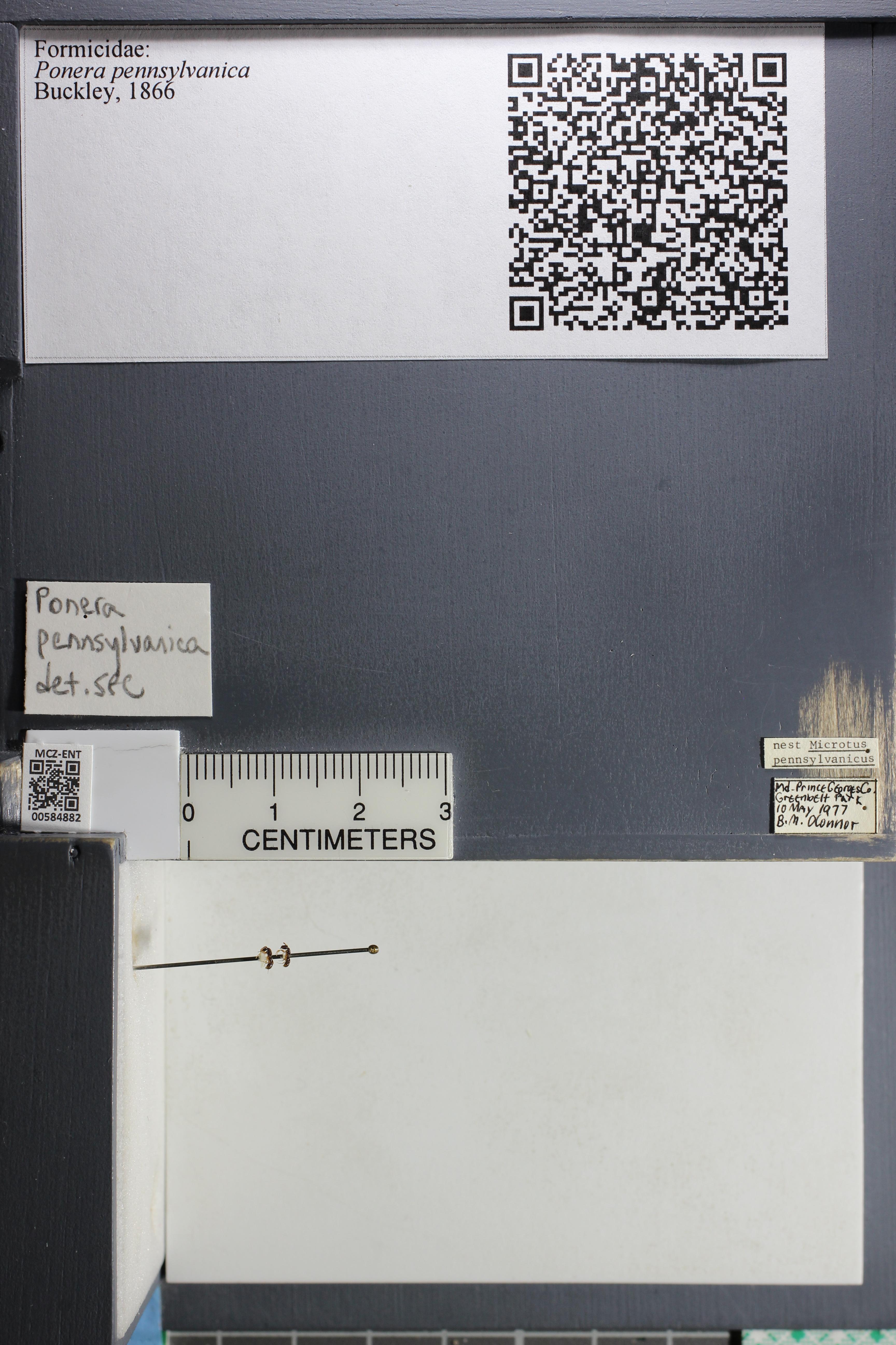 http://mczbase.mcz.harvard.edu/specimen_images/ent-formicidae/datashot/2015_10_27/IMG_339073.JPG
