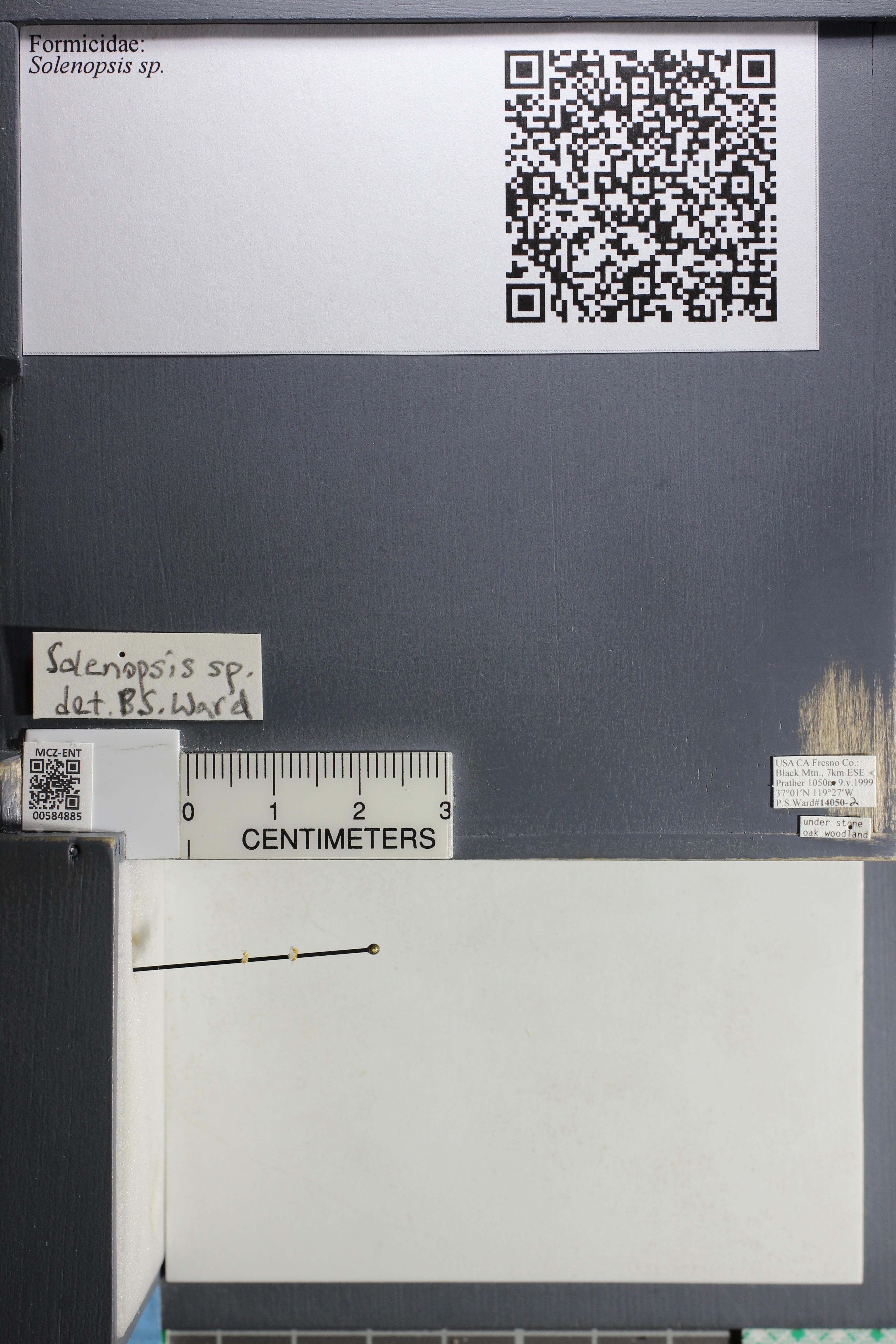 http://mczbase.mcz.harvard.edu/specimen_images/ent-formicidae/datashot/2015_10_27/IMG_339077.JPG