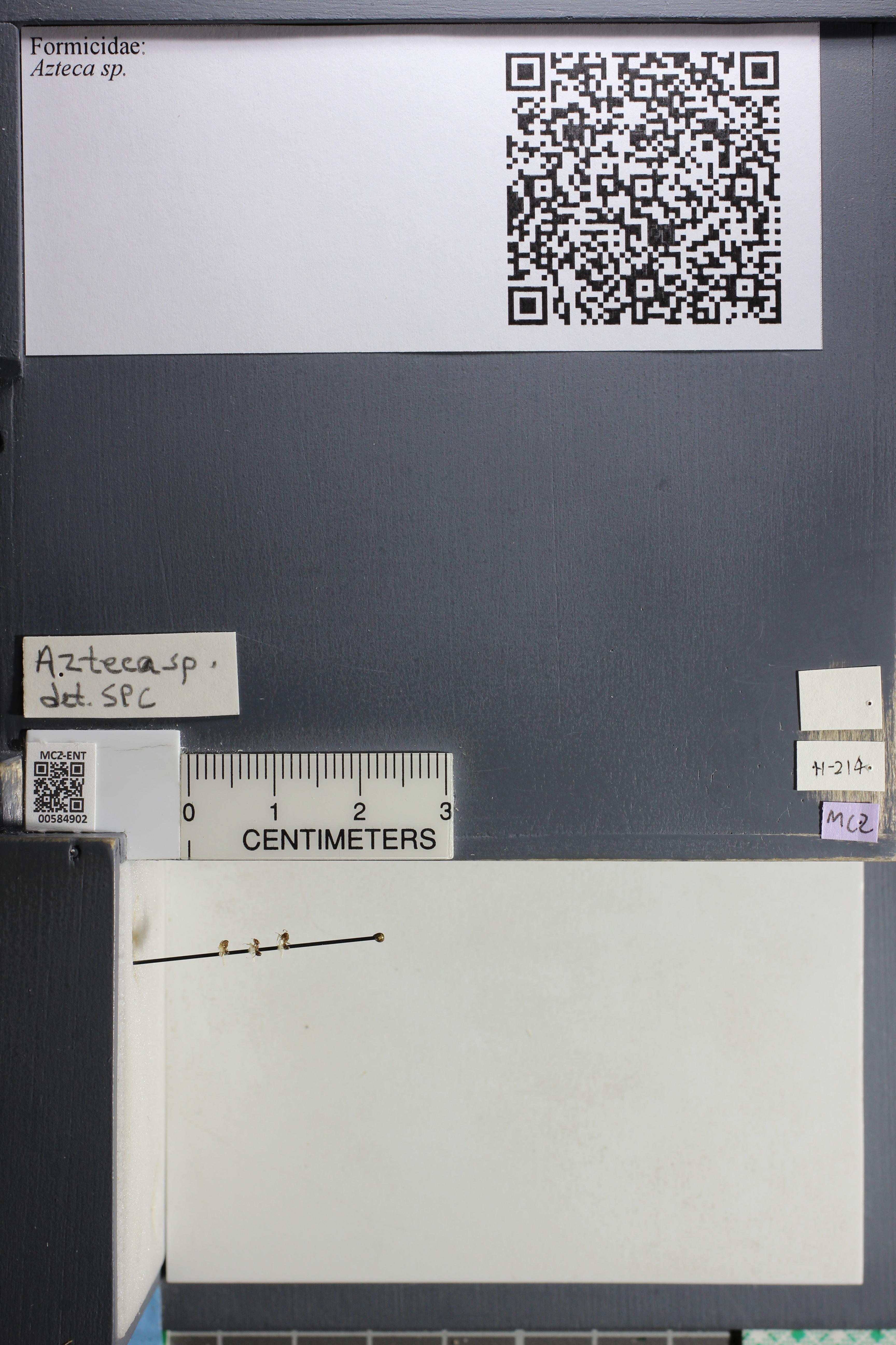 http://mczbase.mcz.harvard.edu/specimen_images/ent-formicidae/datashot/2015_10_27/IMG_339095.JPG