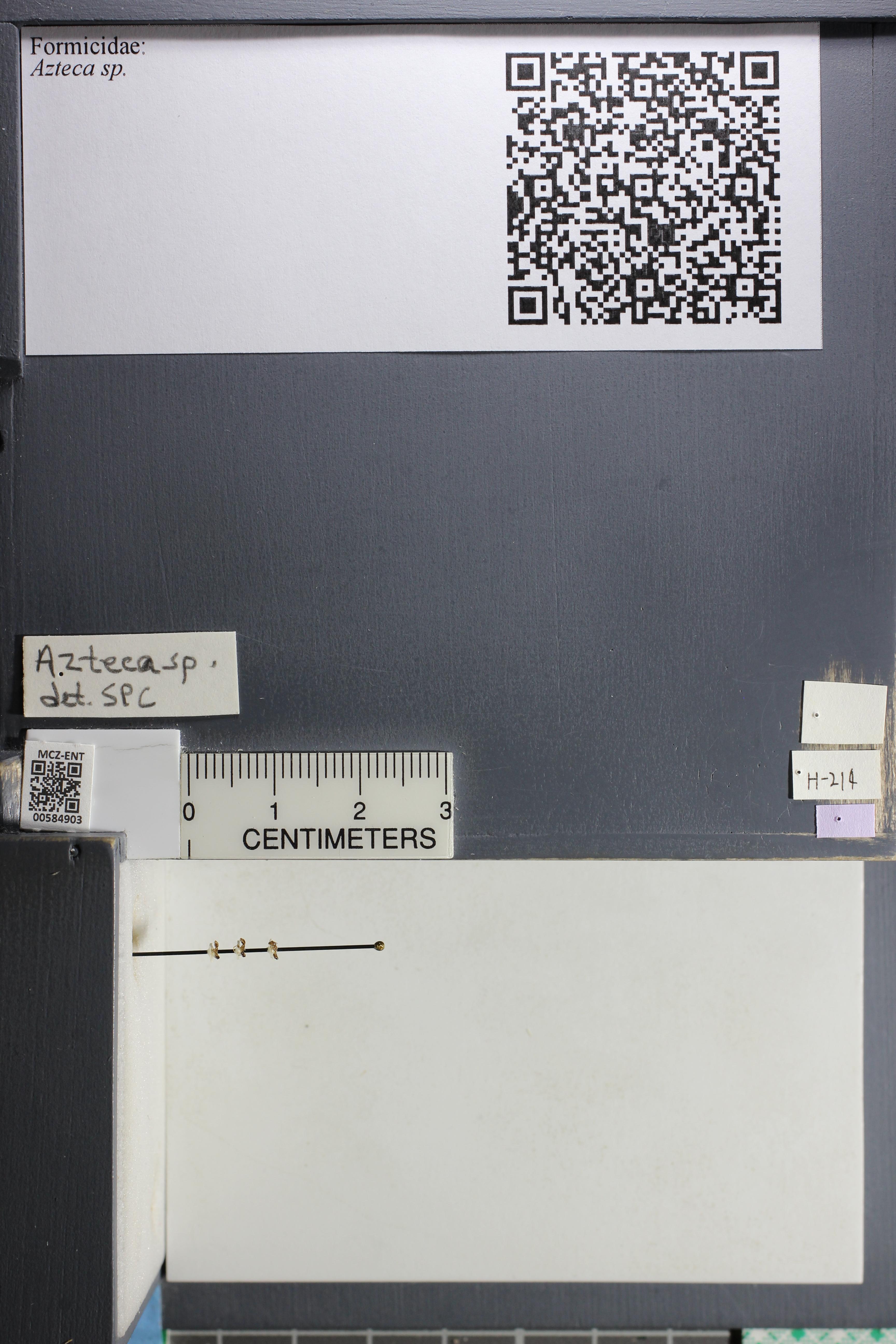 http://mczbase.mcz.harvard.edu/specimen_images/ent-formicidae/datashot/2015_10_27/IMG_339098.JPG