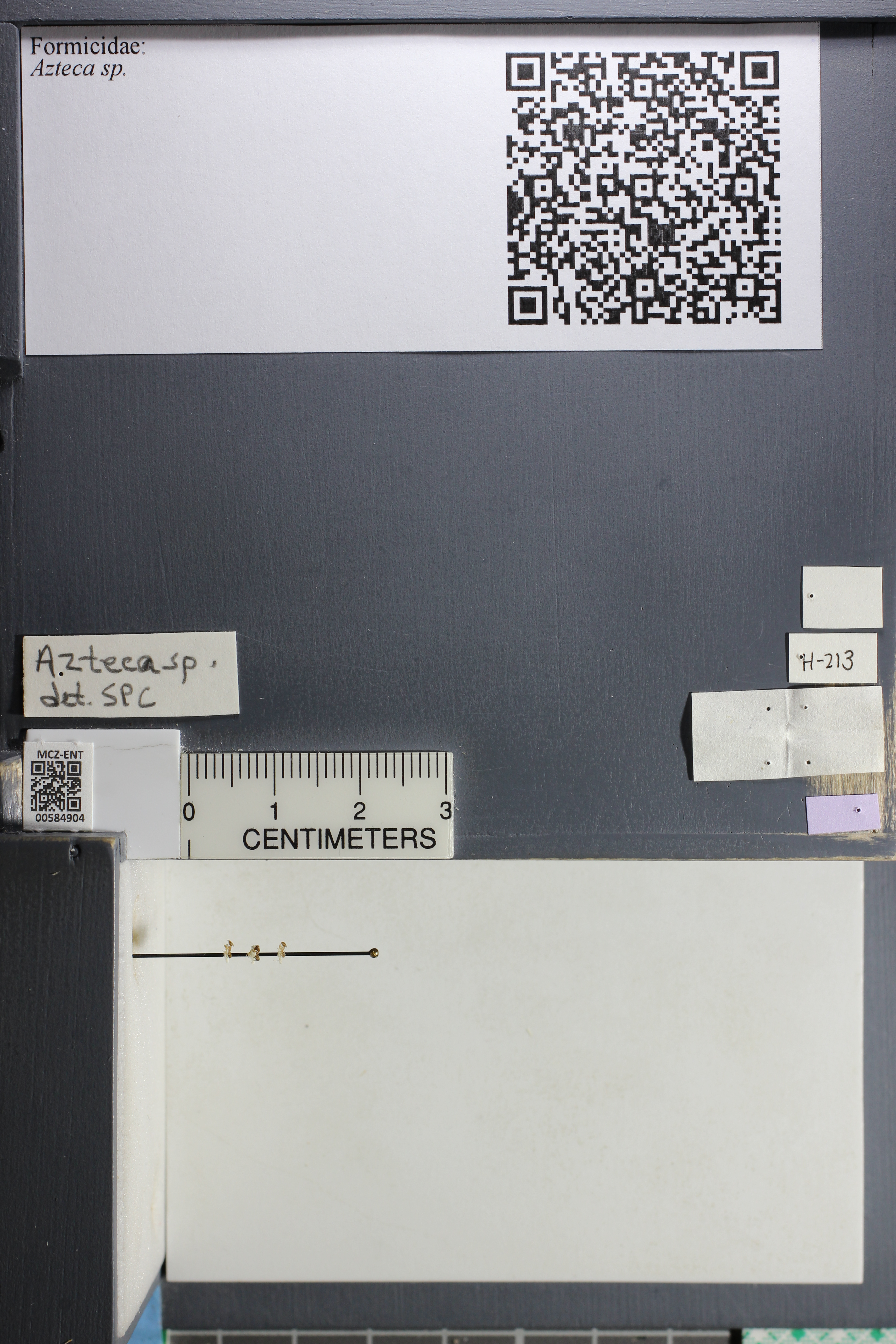 http://mczbase.mcz.harvard.edu/specimen_images/ent-formicidae/datashot/2015_10_27/IMG_339100.JPG