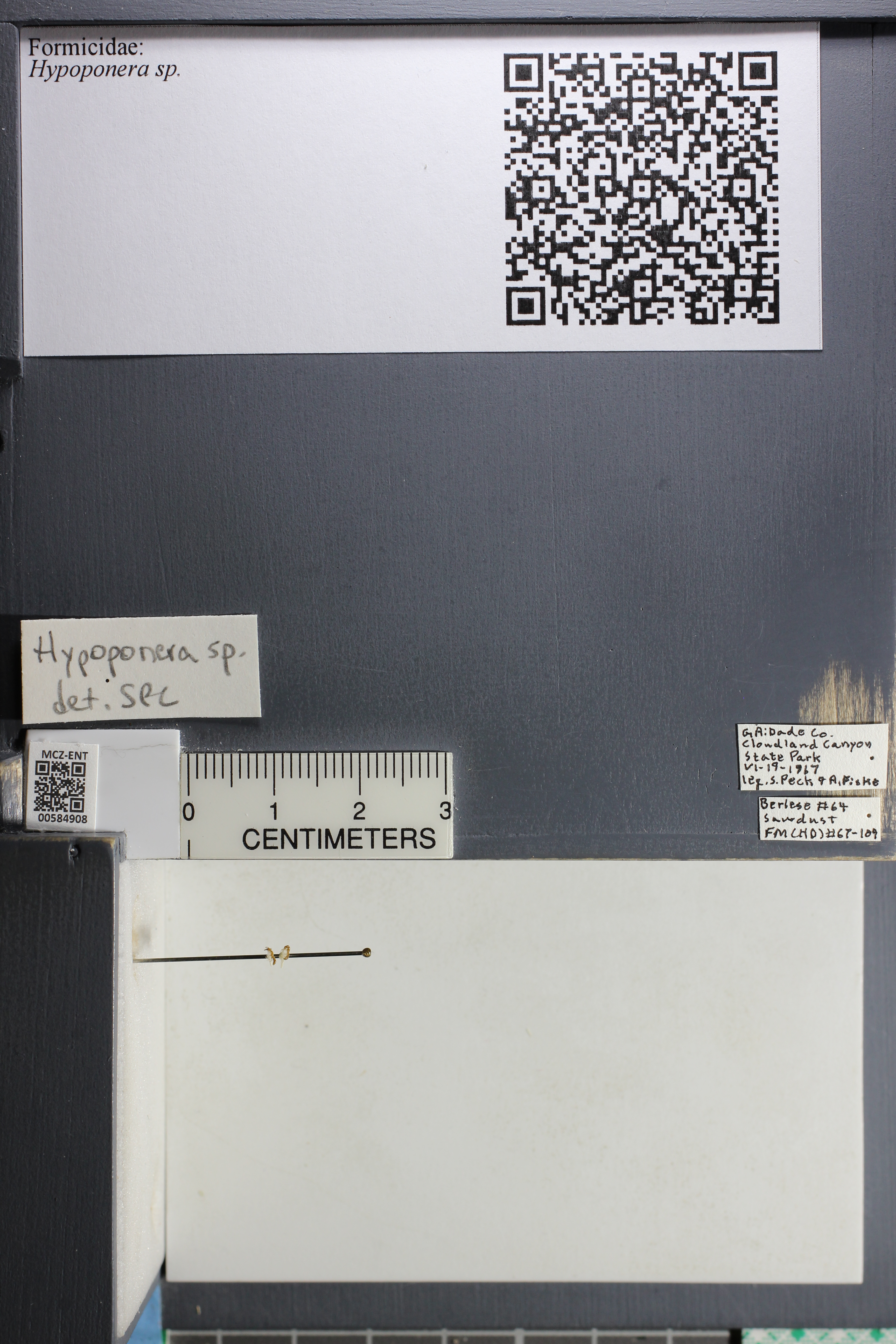http://mczbase.mcz.harvard.edu/specimen_images/ent-formicidae/datashot/2015_10_27/IMG_339106.JPG
