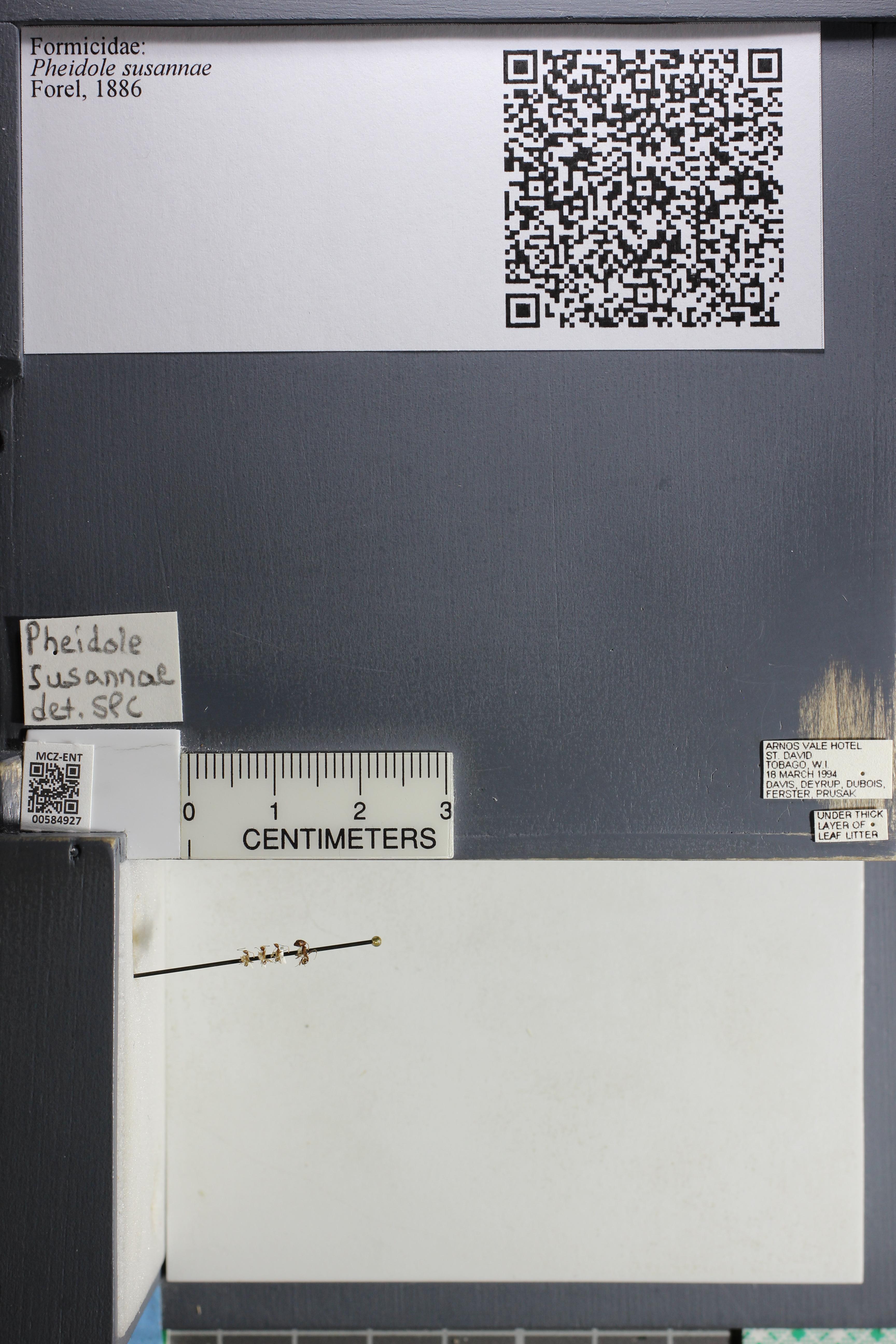 http://mczbase.mcz.harvard.edu/specimen_images/ent-formicidae/datashot/2015_10_27/IMG_339128.JPG