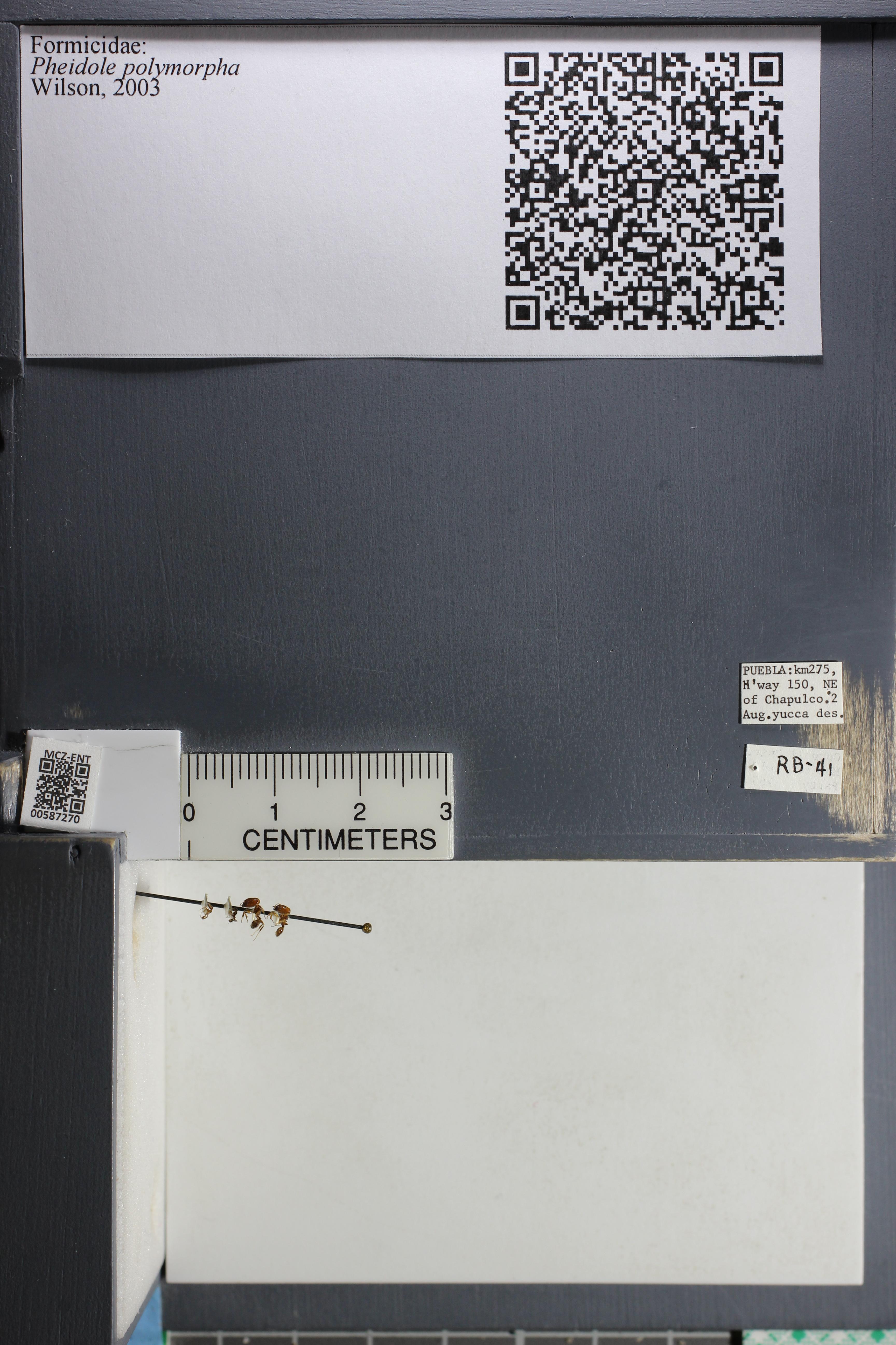 http://mczbase.mcz.harvard.edu/specimen_images/ent-formicidae/datashot/2015_11_18/IMG_339939.JPG