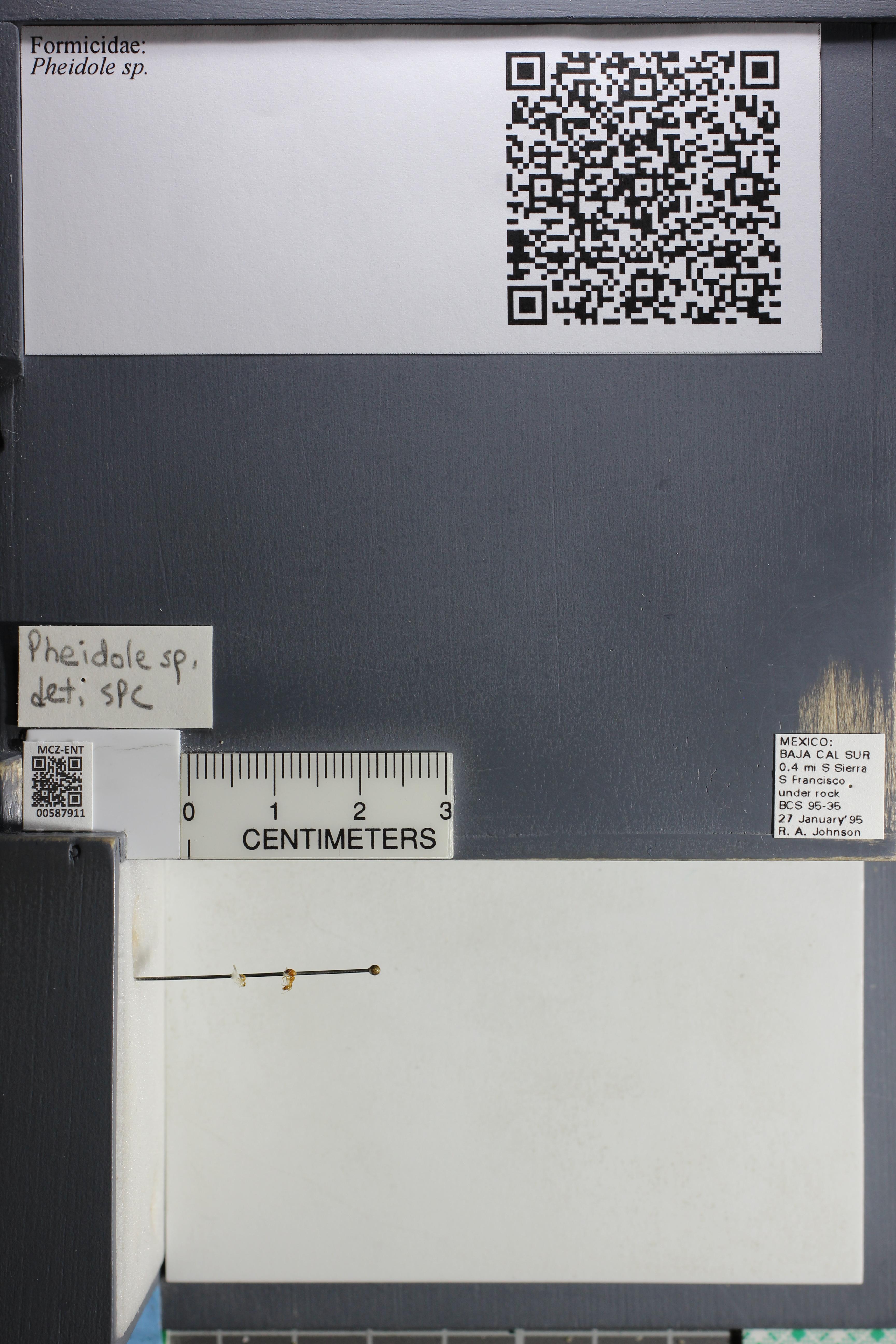 http://mczbase.mcz.harvard.edu/specimen_images/ent-formicidae/datashot/2015_11_19/IMG_340014.JPG