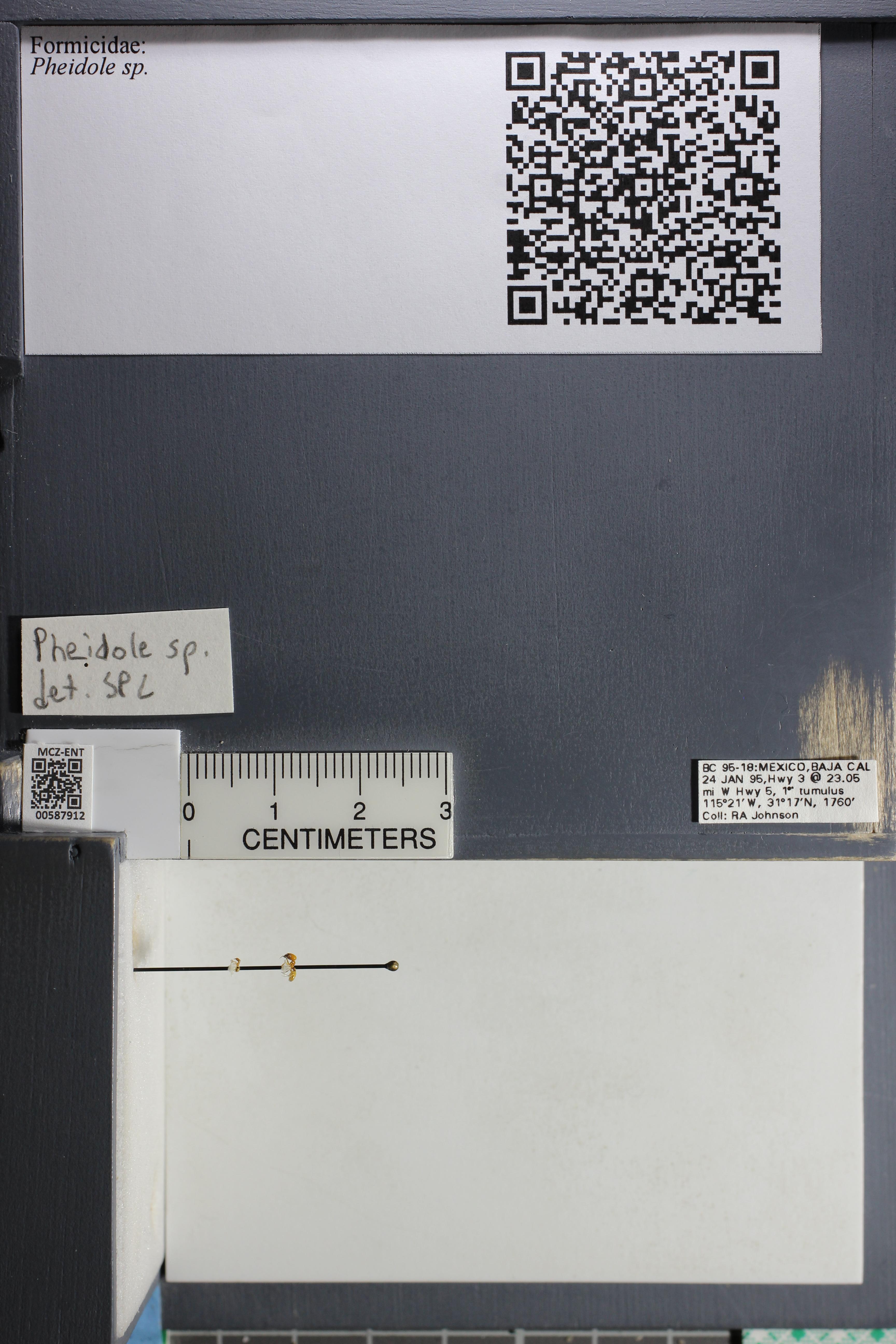 http://mczbase.mcz.harvard.edu/specimen_images/ent-formicidae/datashot/2015_11_19/IMG_340015.JPG