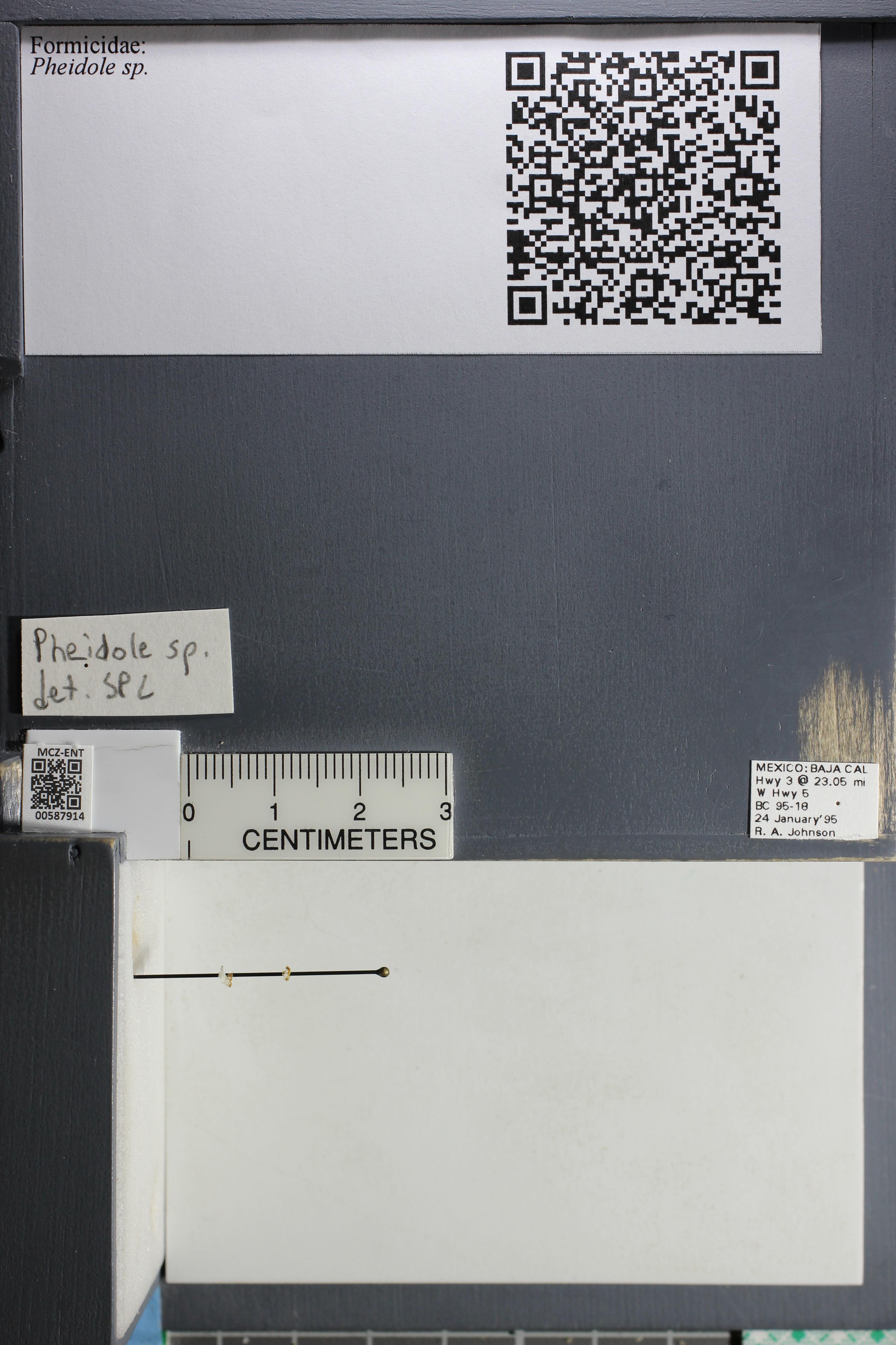 http://mczbase.mcz.harvard.edu/specimen_images/ent-formicidae/datashot/2015_11_19/IMG_340017.JPG