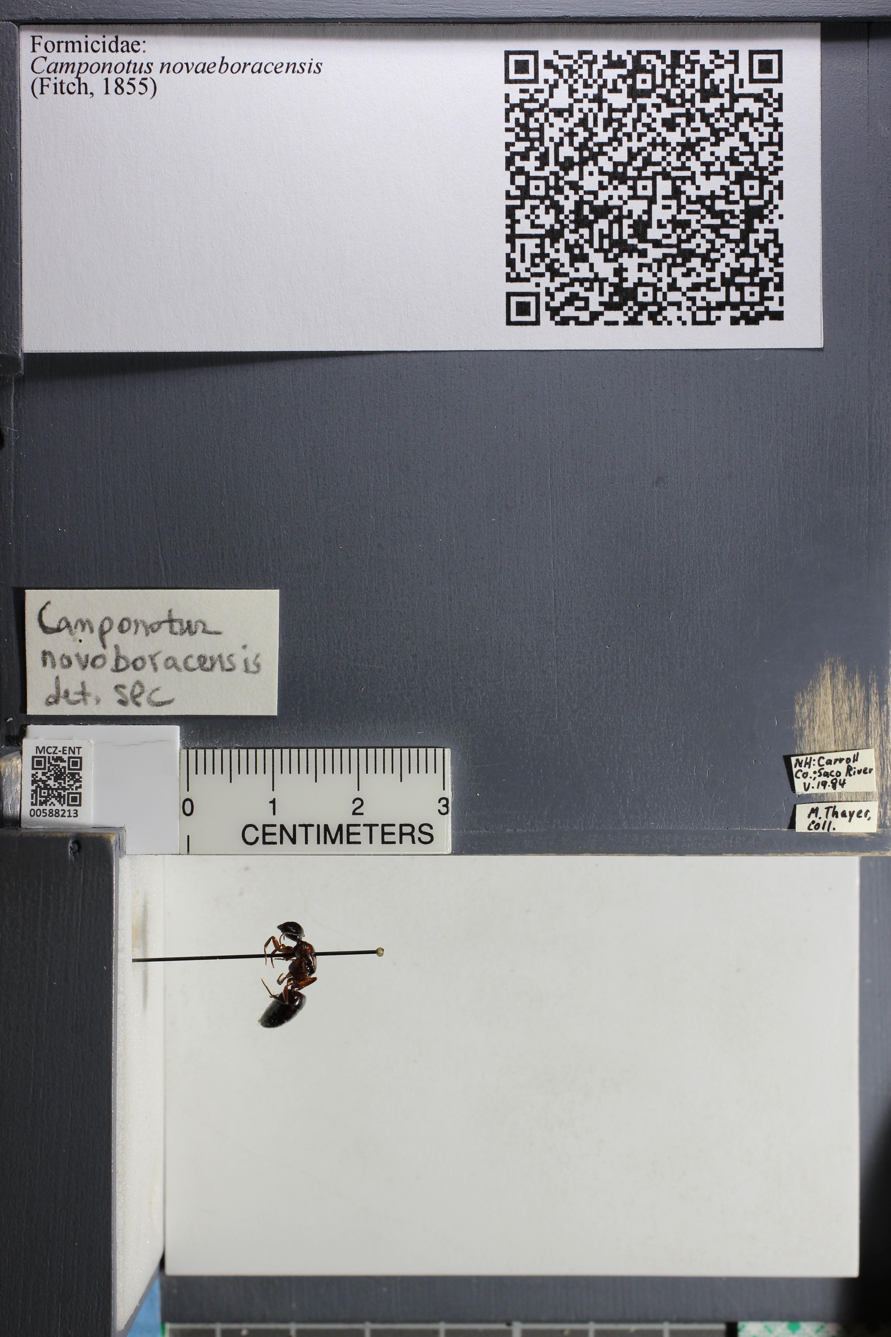 http://mczbase.mcz.harvard.edu/specimen_images/ent-formicidae/datashot/2015_11_20_DRAWER11/IMG_340132.JPG