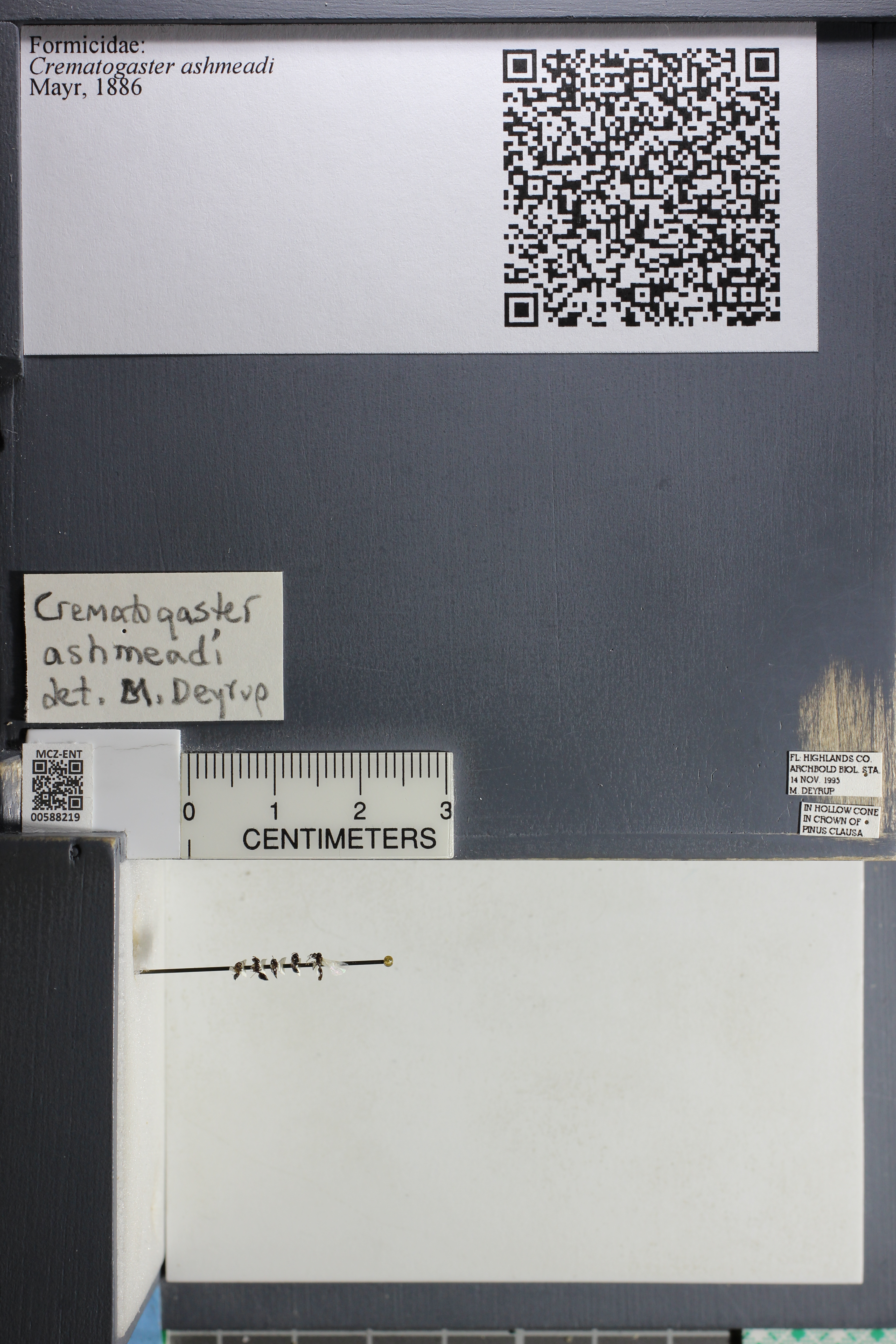 http://mczbase.mcz.harvard.edu/specimen_images/ent-formicidae/datashot/2015_11_20_DRAWER11/IMG_340138.JPG