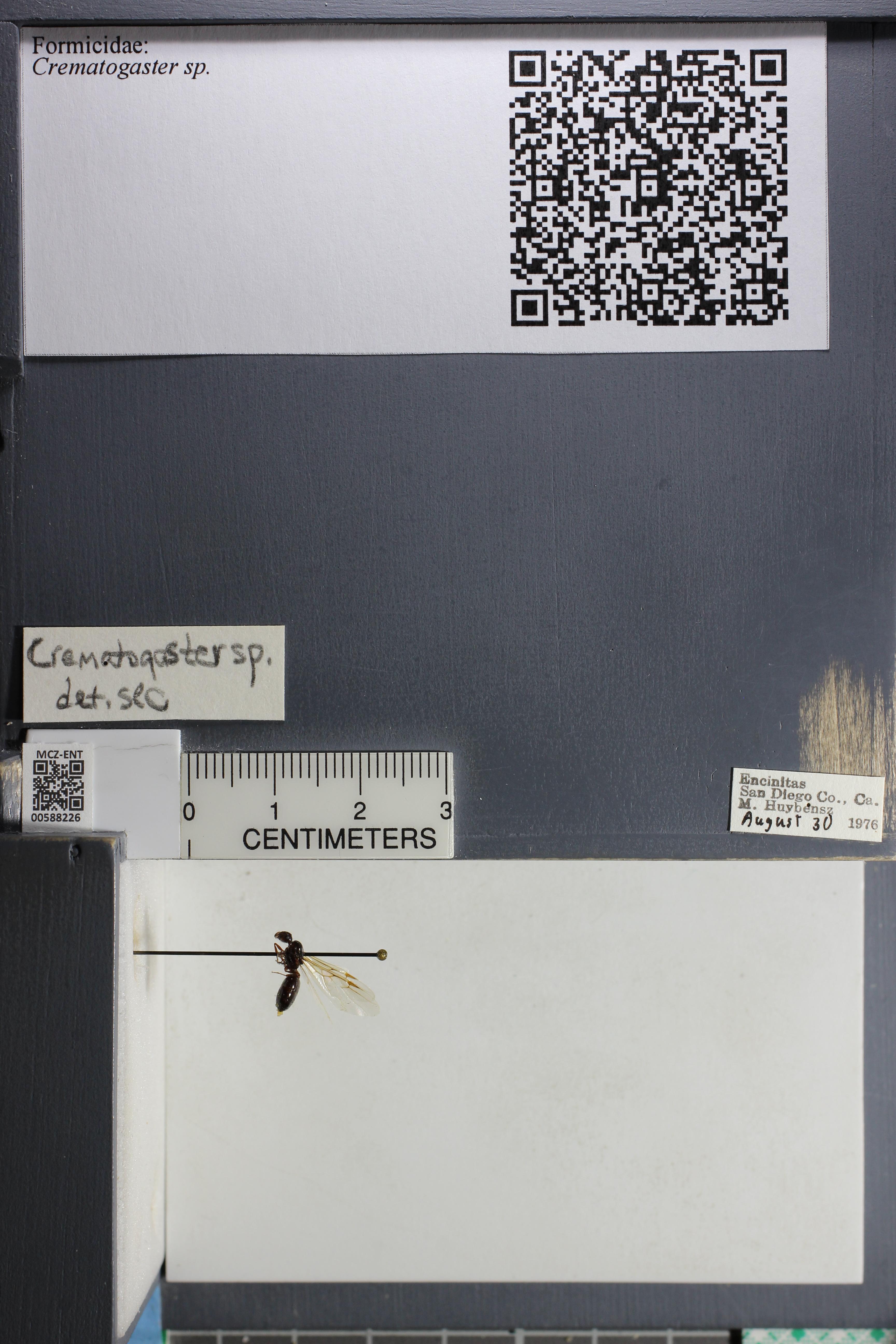 http://mczbase.mcz.harvard.edu/specimen_images/ent-formicidae/datashot/2015_11_20_DRAWER11/IMG_340145.JPG