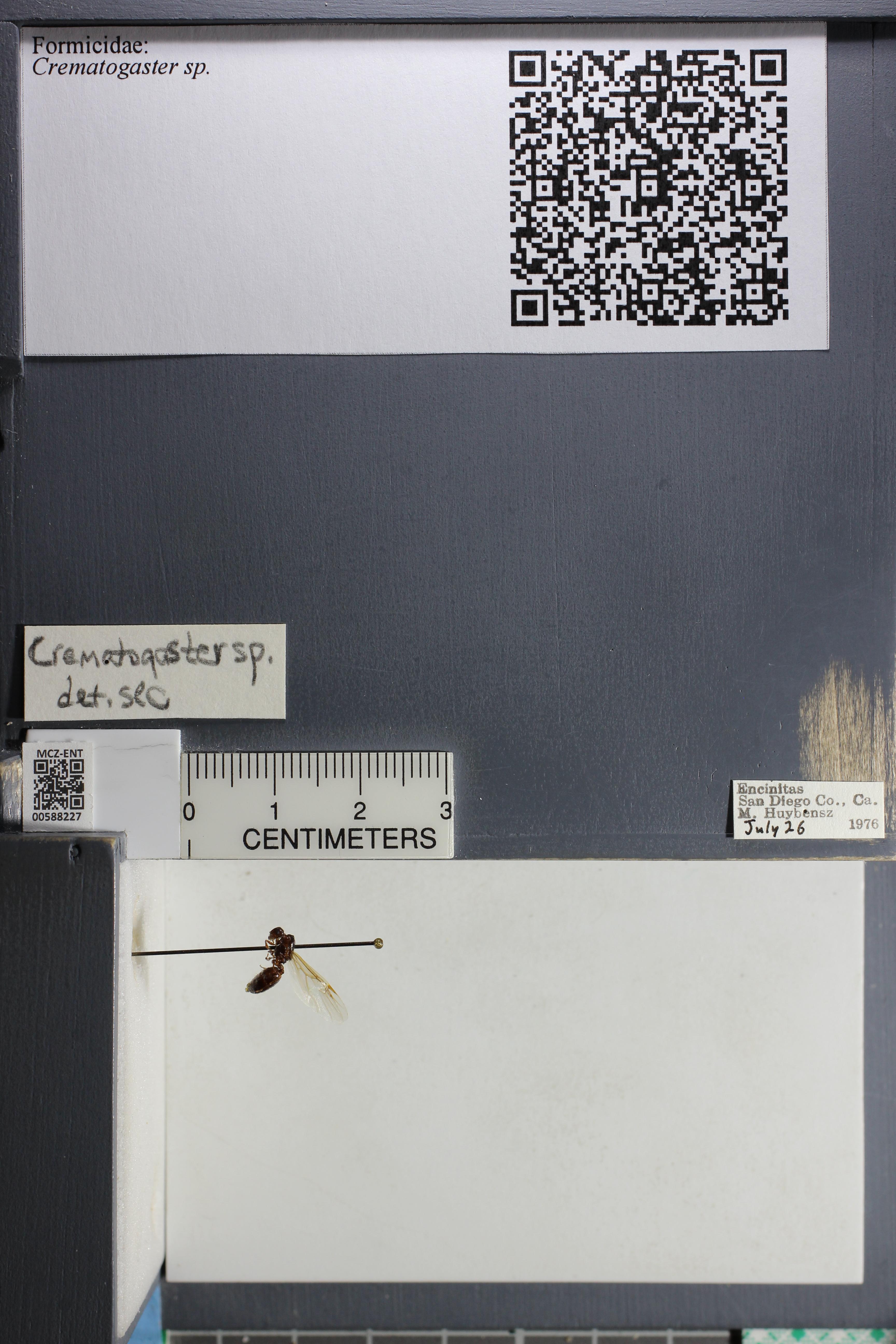 http://mczbase.mcz.harvard.edu/specimen_images/ent-formicidae/datashot/2015_11_20_DRAWER11/IMG_340146.JPG