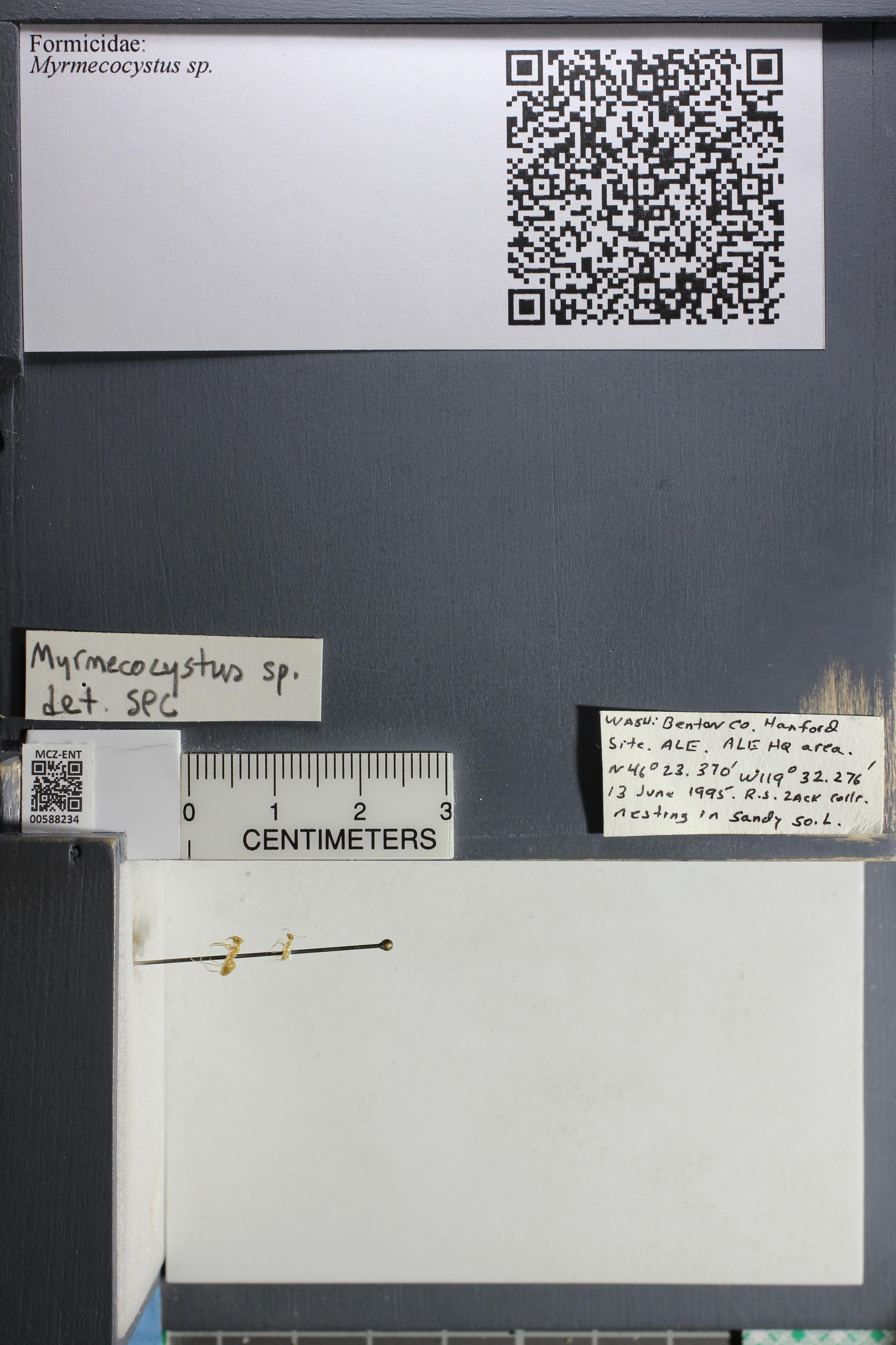 http://mczbase.mcz.harvard.edu/specimen_images/ent-formicidae/datashot/2015_11_20_DRAWER11/IMG_340153.JPG