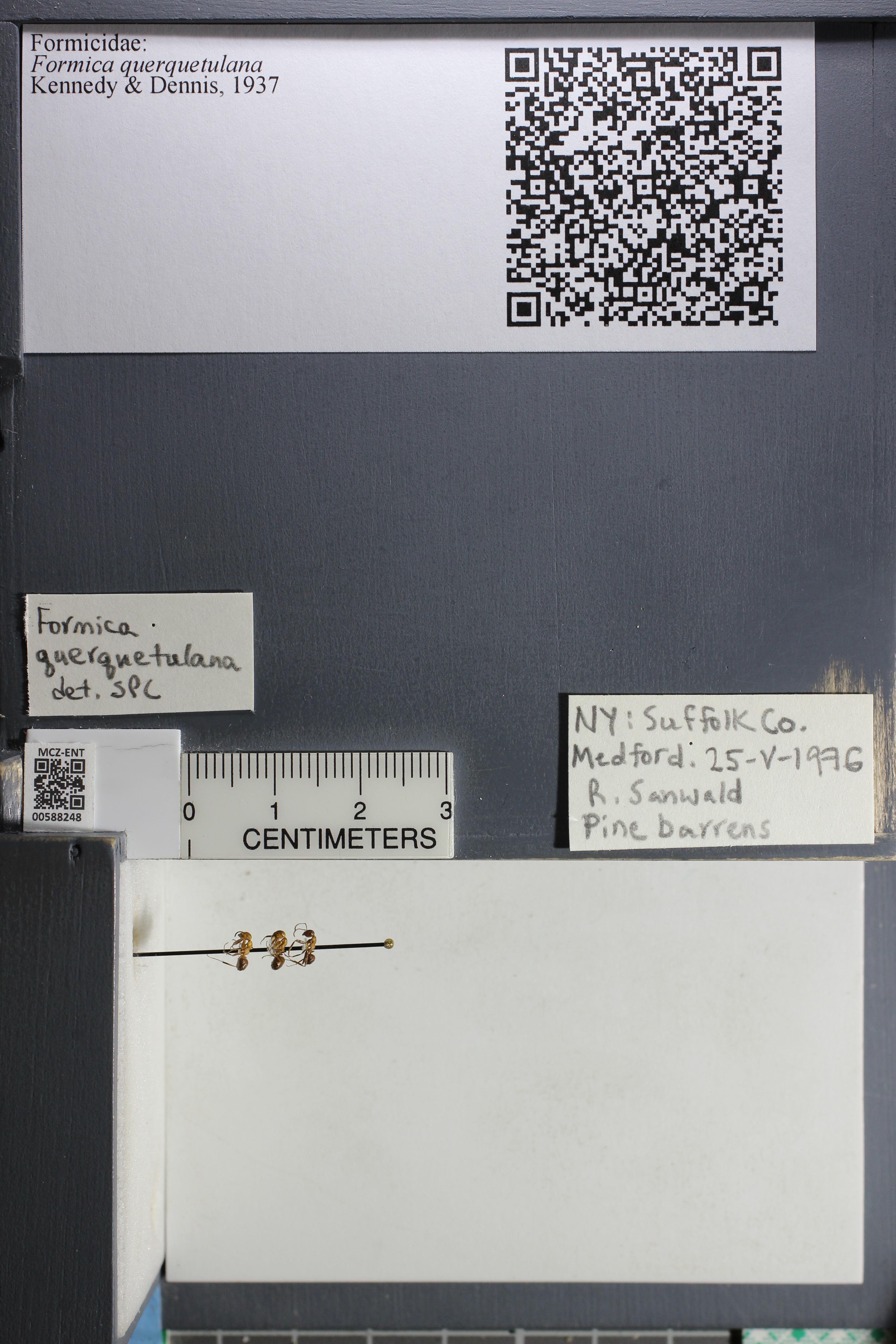 http://mczbase.mcz.harvard.edu/specimen_images/ent-formicidae/datashot/2015_11_20_DRAWER11/IMG_340167.JPG
