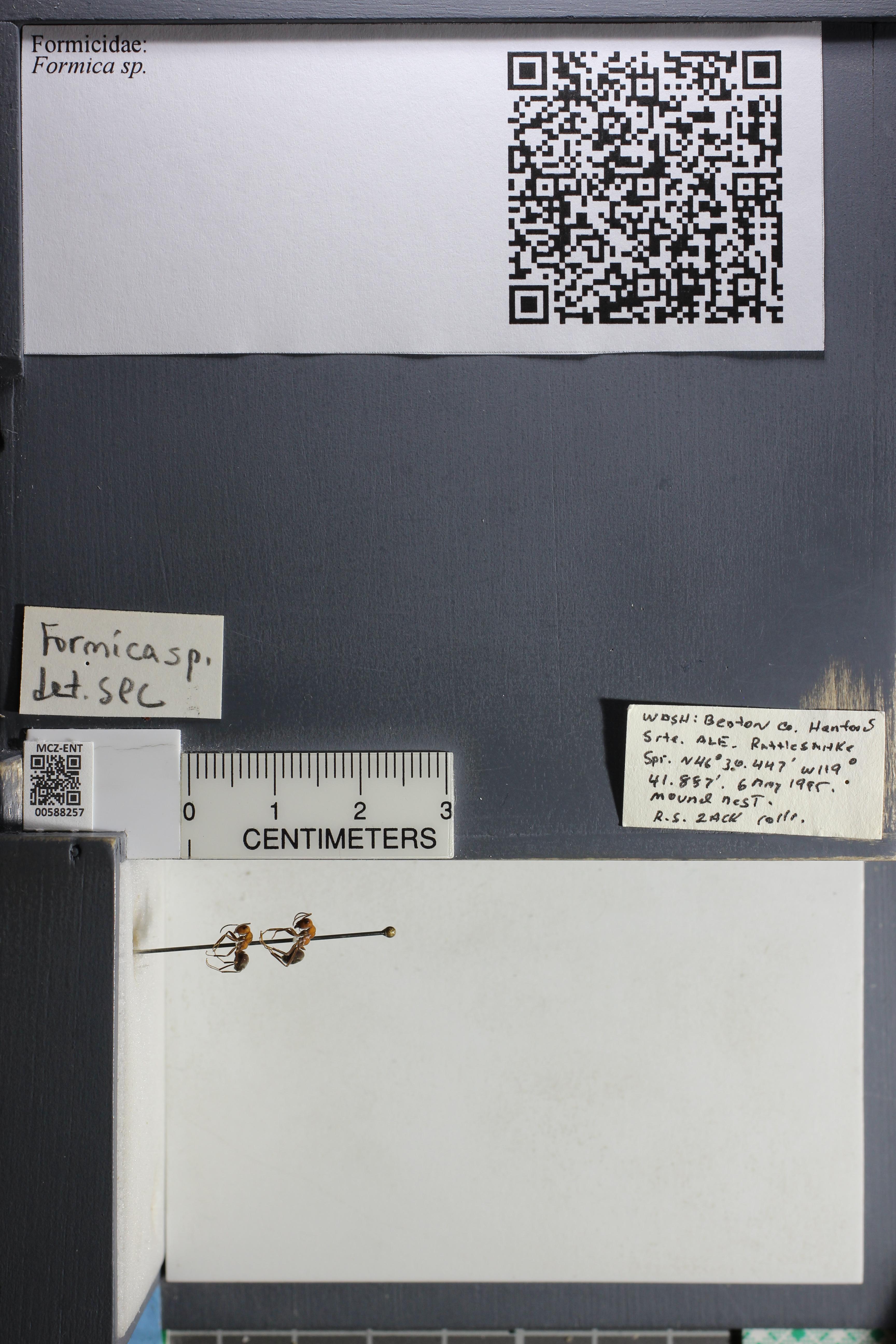 http://mczbase.mcz.harvard.edu/specimen_images/ent-formicidae/datashot/2015_11_20_DRAWER11/IMG_340176.JPG