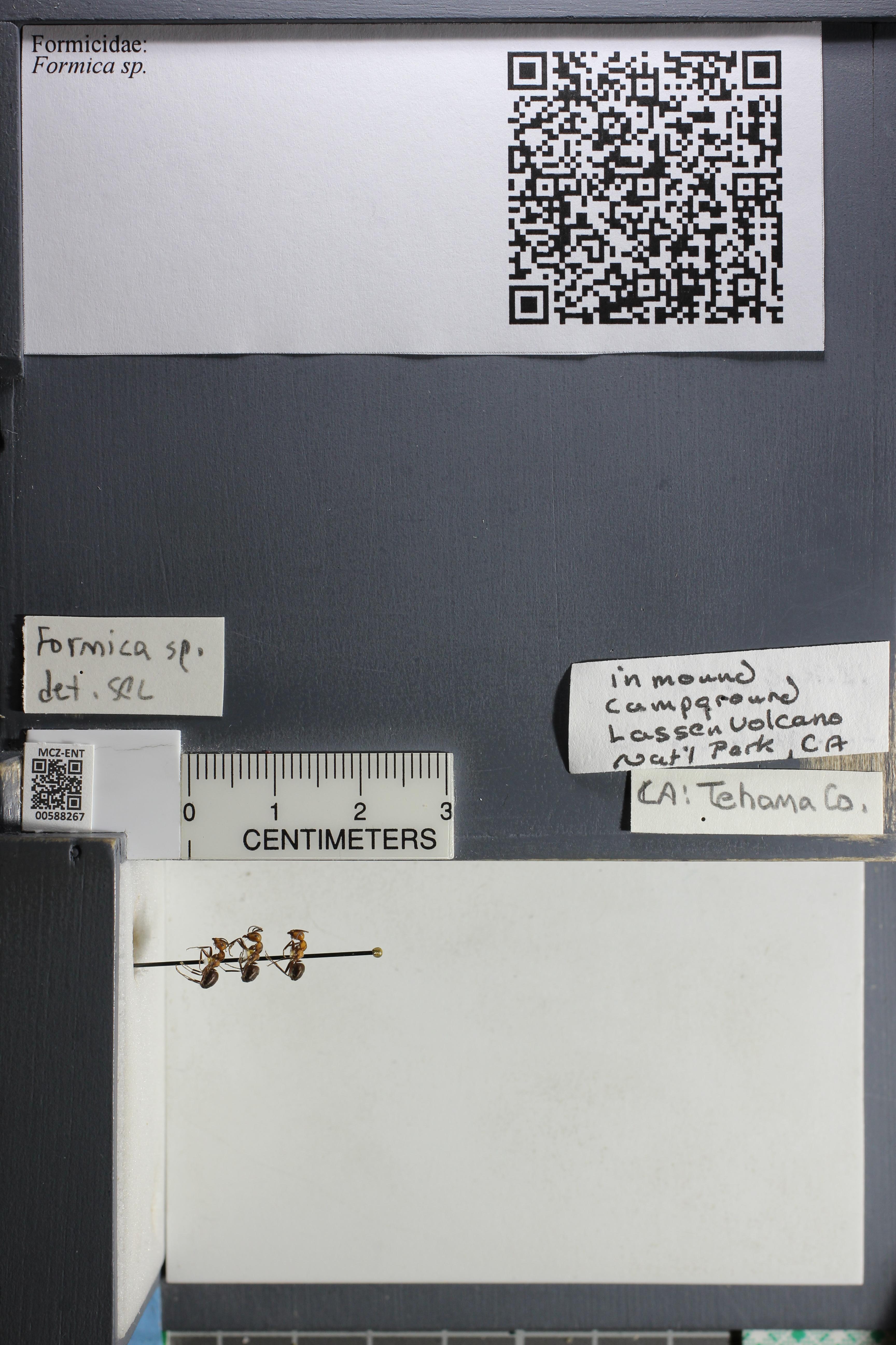 http://mczbase.mcz.harvard.edu/specimen_images/ent-formicidae/datashot/2015_11_20_DRAWER11/IMG_340190.JPG