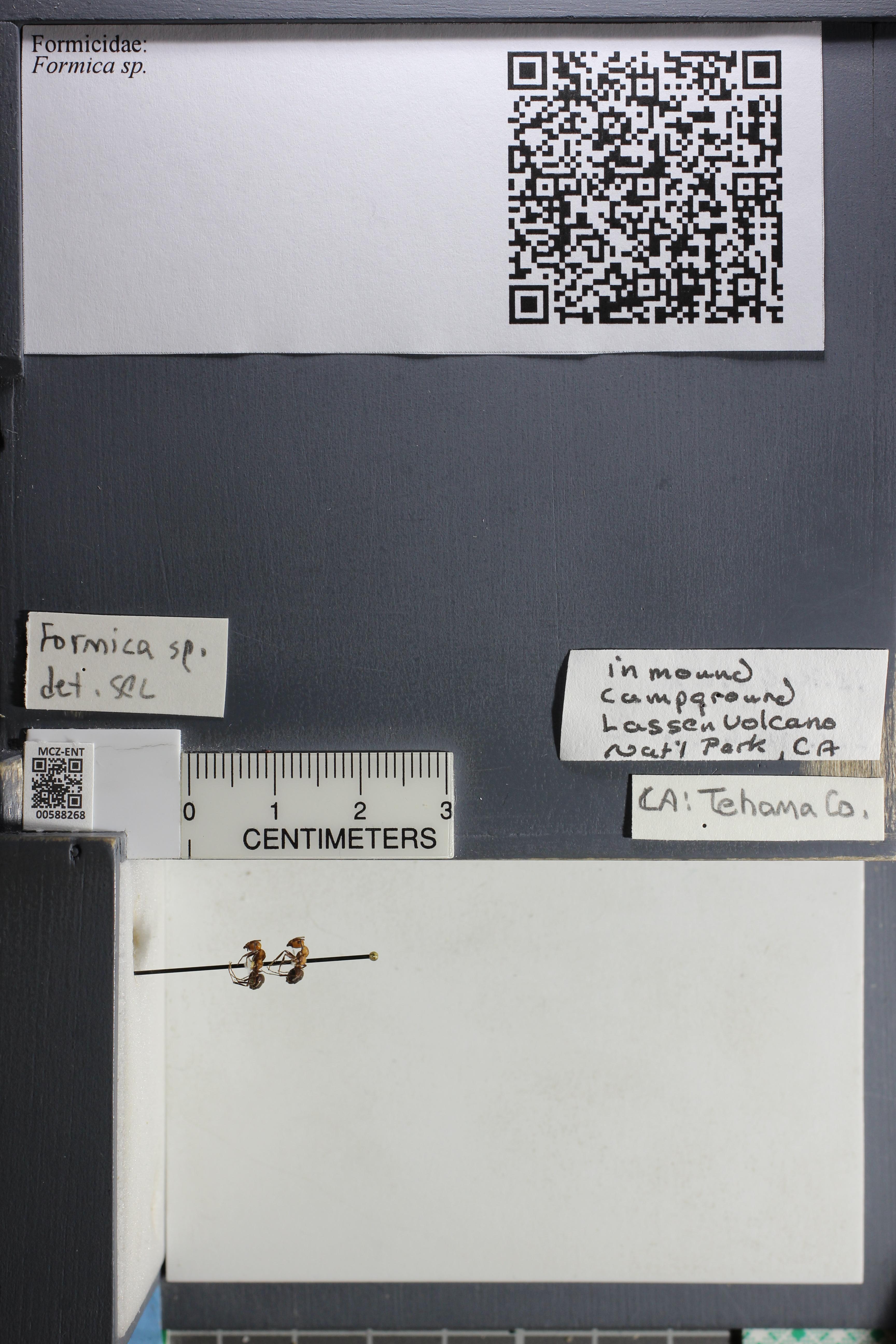 http://mczbase.mcz.harvard.edu/specimen_images/ent-formicidae/datashot/2015_11_20_DRAWER11/IMG_340193.JPG