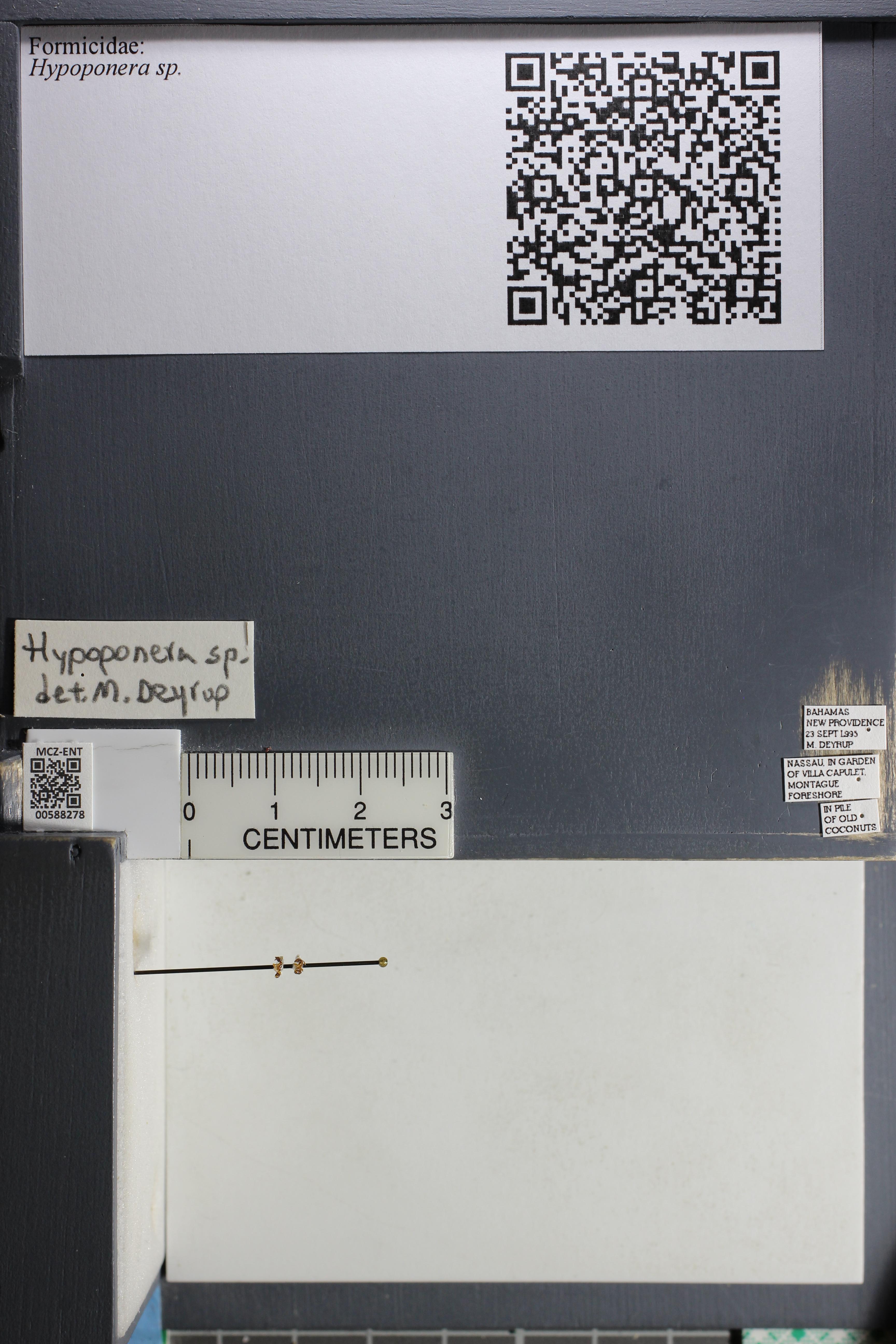 http://mczbase.mcz.harvard.edu/specimen_images/ent-formicidae/datashot/2015_11_20_DRAWER11/IMG_340213.JPG