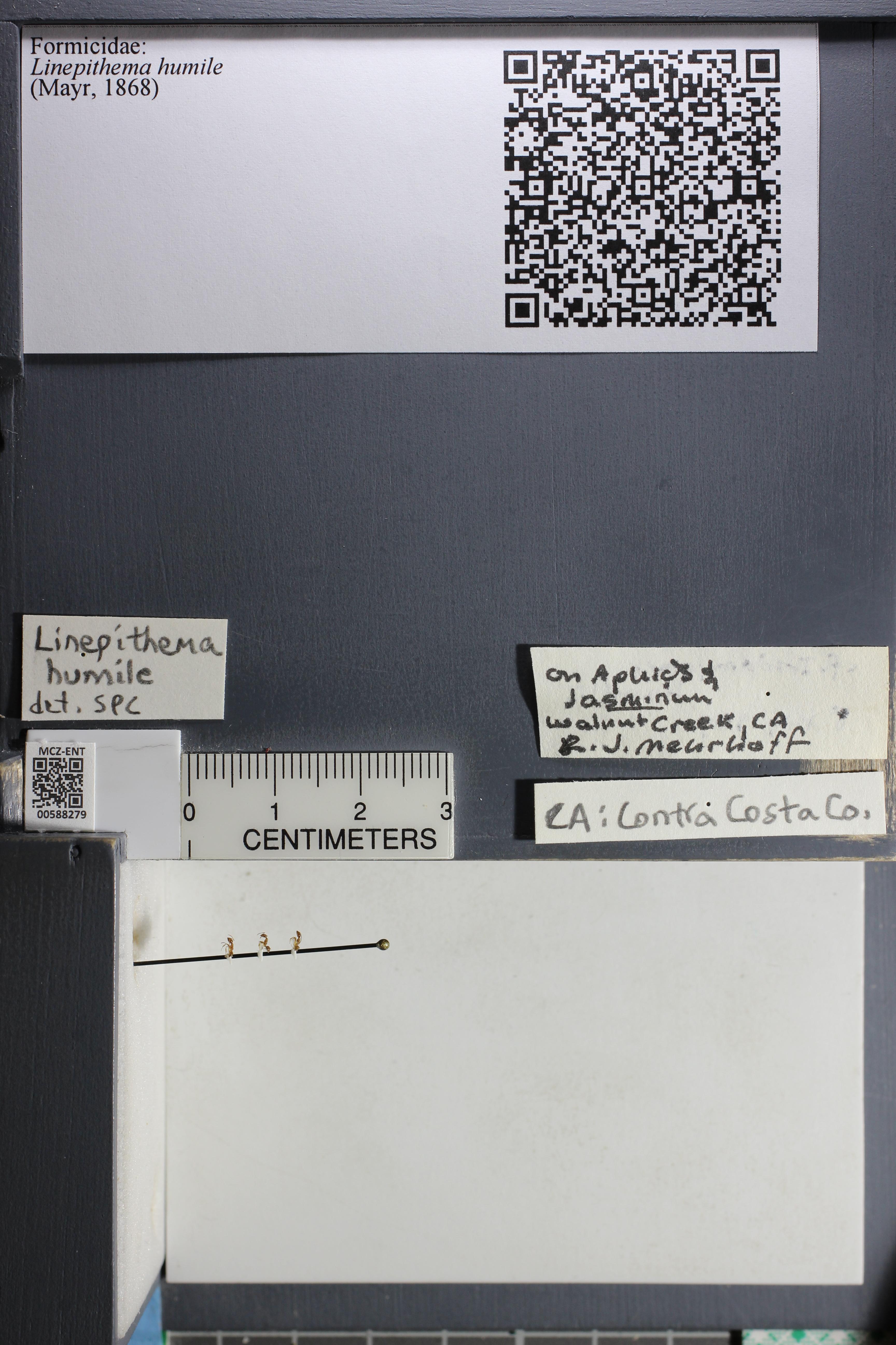 http://mczbase.mcz.harvard.edu/specimen_images/ent-formicidae/datashot/2015_11_20_DRAWER11/IMG_340214.JPG