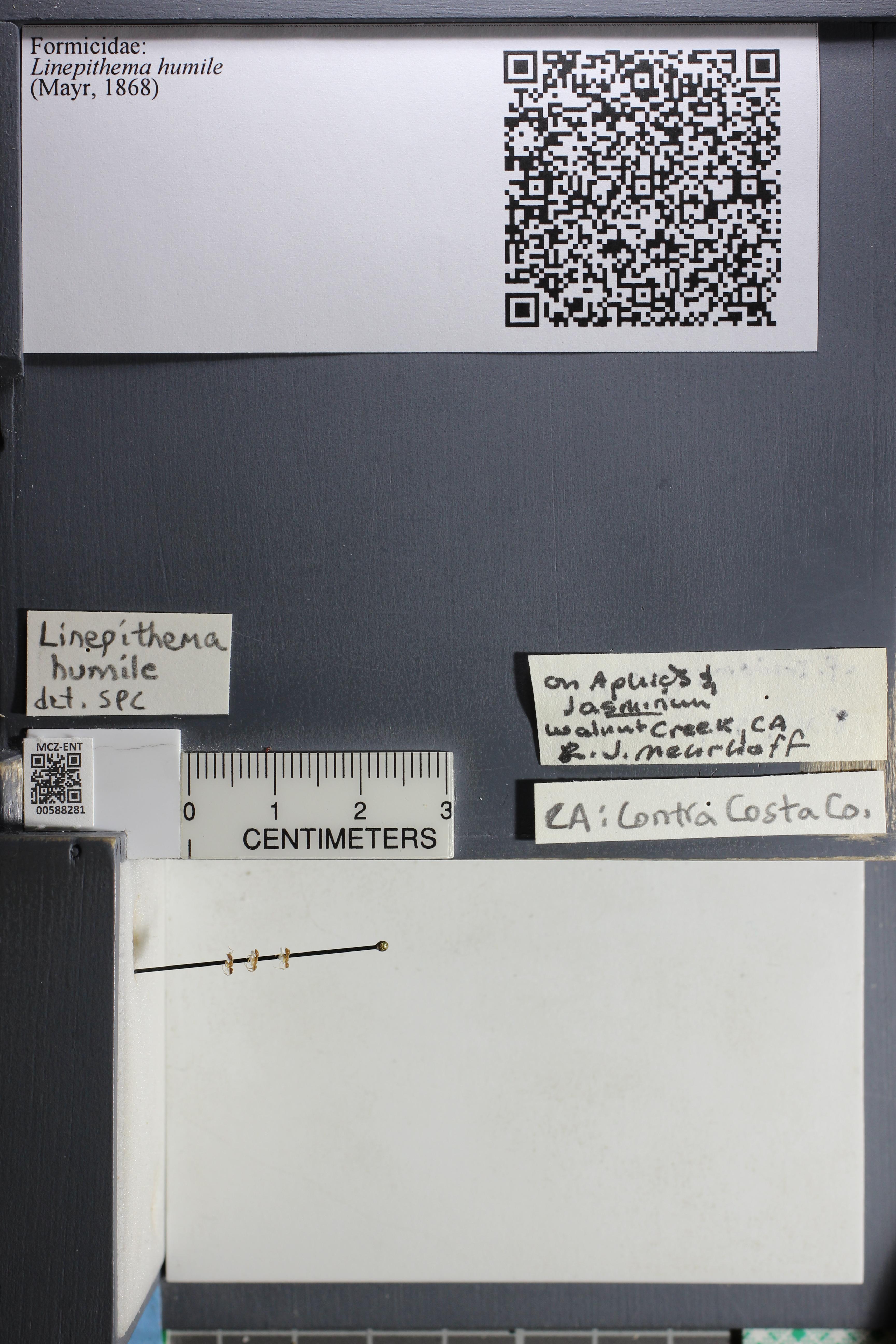 http://mczbase.mcz.harvard.edu/specimen_images/ent-formicidae/datashot/2015_11_20_DRAWER11/IMG_340218.JPG