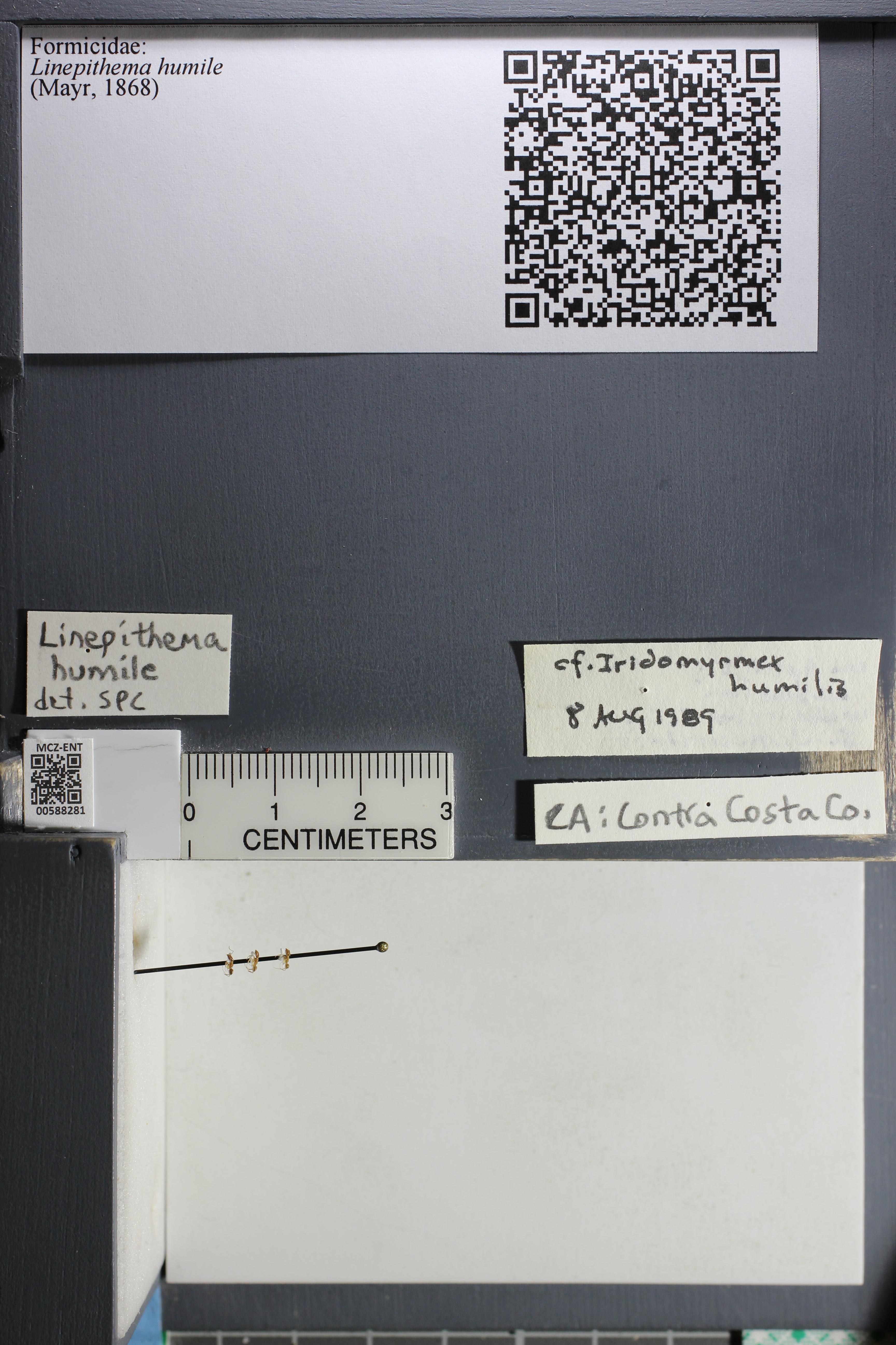 http://mczbase.mcz.harvard.edu/specimen_images/ent-formicidae/datashot/2015_11_20_DRAWER11/IMG_340219.JPG