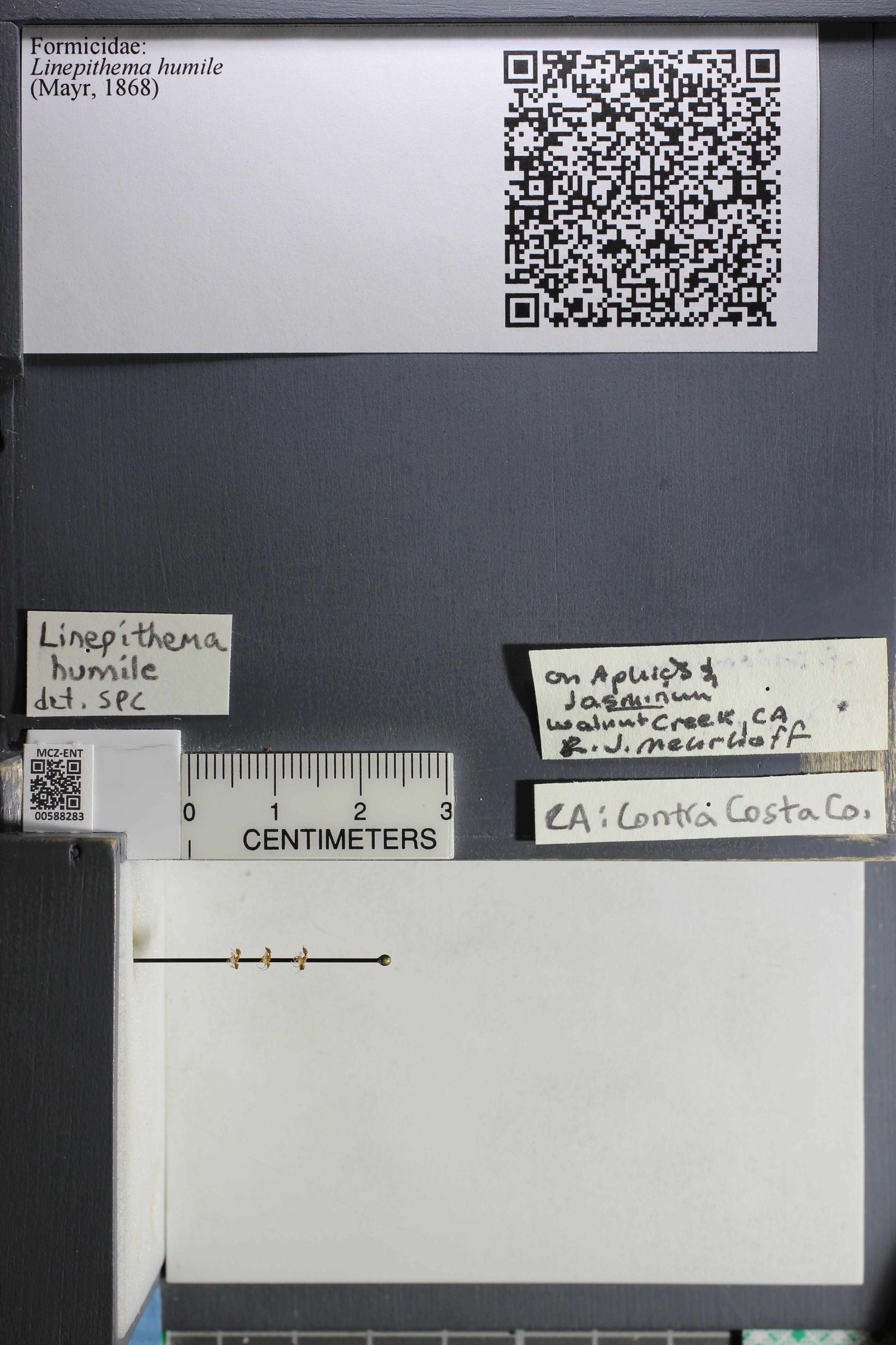 http://mczbase.mcz.harvard.edu/specimen_images/ent-formicidae/datashot/2015_11_20_DRAWER11/IMG_340222.JPG