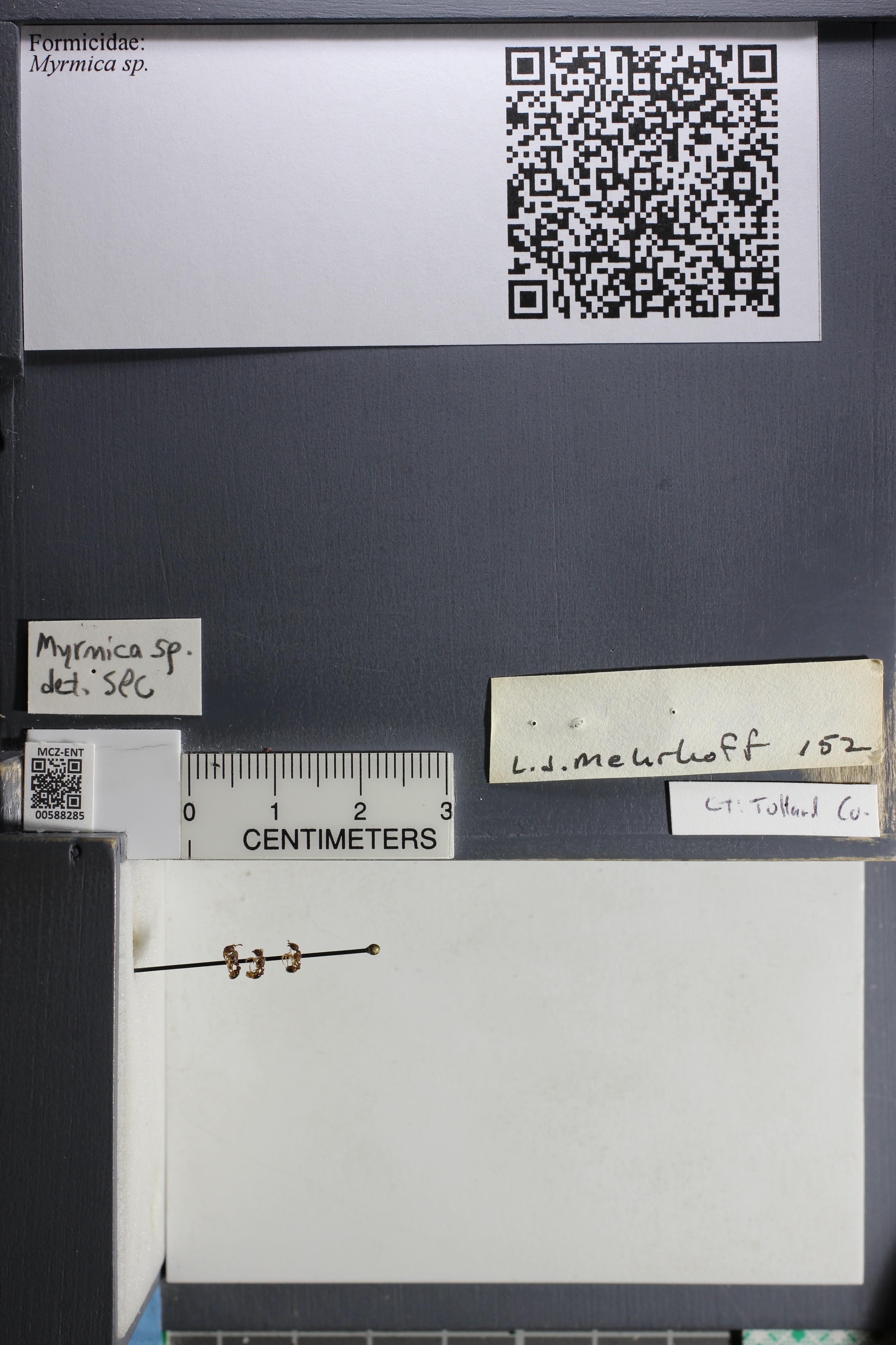 http://mczbase.mcz.harvard.edu/specimen_images/ent-formicidae/datashot/2015_11_20_DRAWER11/IMG_340226.JPG