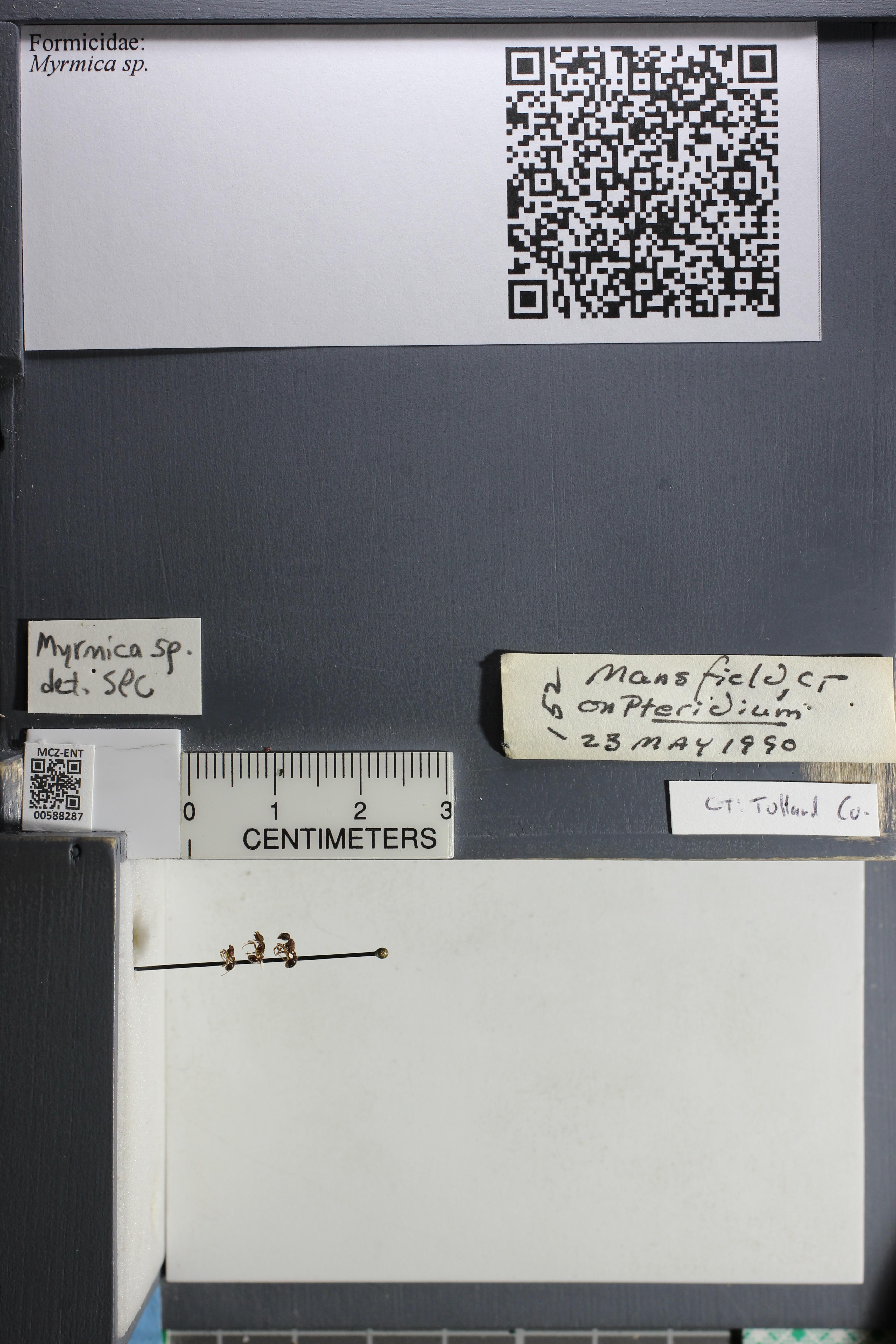 http://mczbase.mcz.harvard.edu/specimen_images/ent-formicidae/datashot/2015_11_20_DRAWER11/IMG_340231.JPG