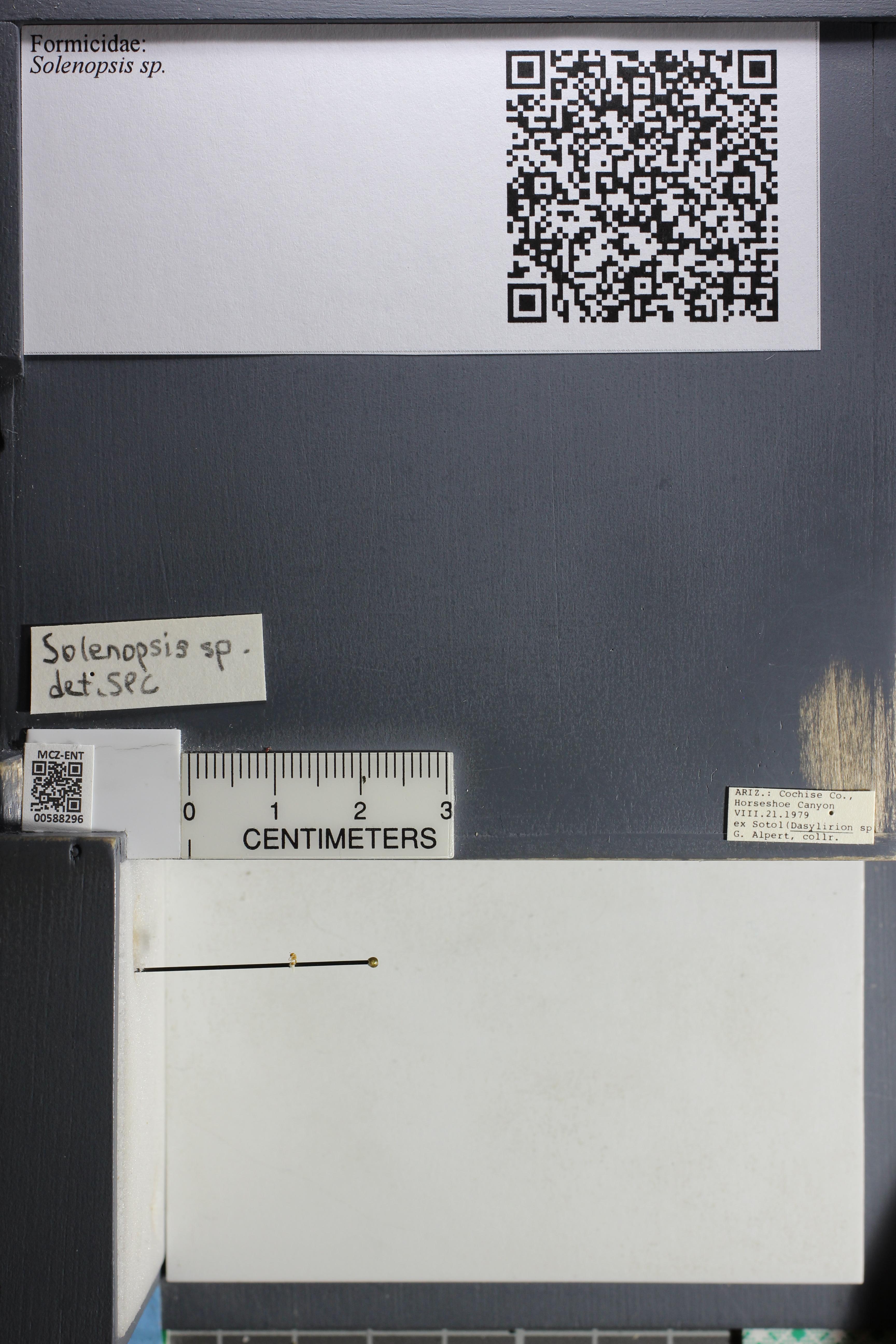 http://mczbase.mcz.harvard.edu/specimen_images/ent-formicidae/datashot/2015_11_20_DRAWER11/IMG_340241.JPG