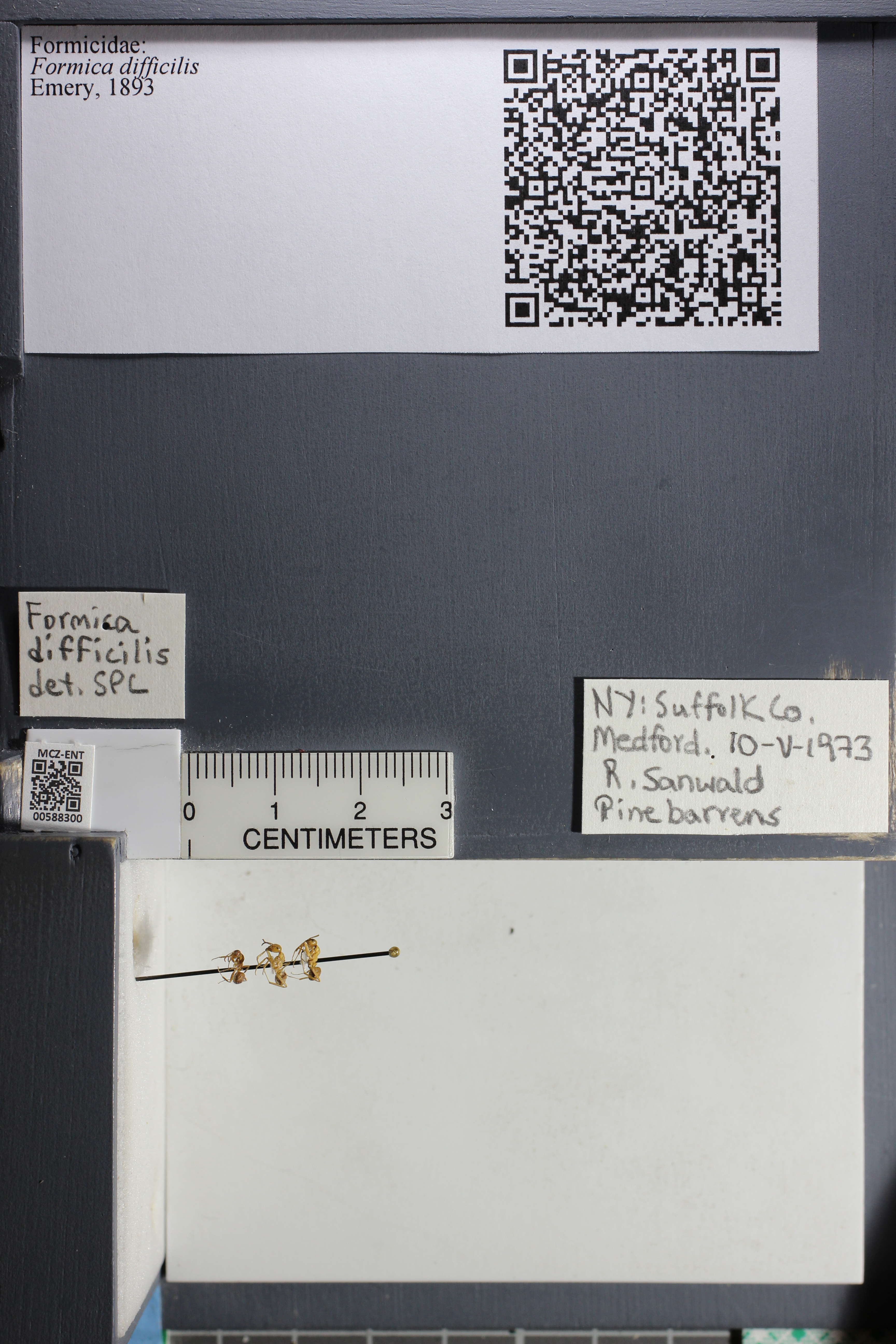 http://mczbase.mcz.harvard.edu/specimen_images/ent-formicidae/datashot/2015_11_20_DRAWER11/IMG_340245.JPG