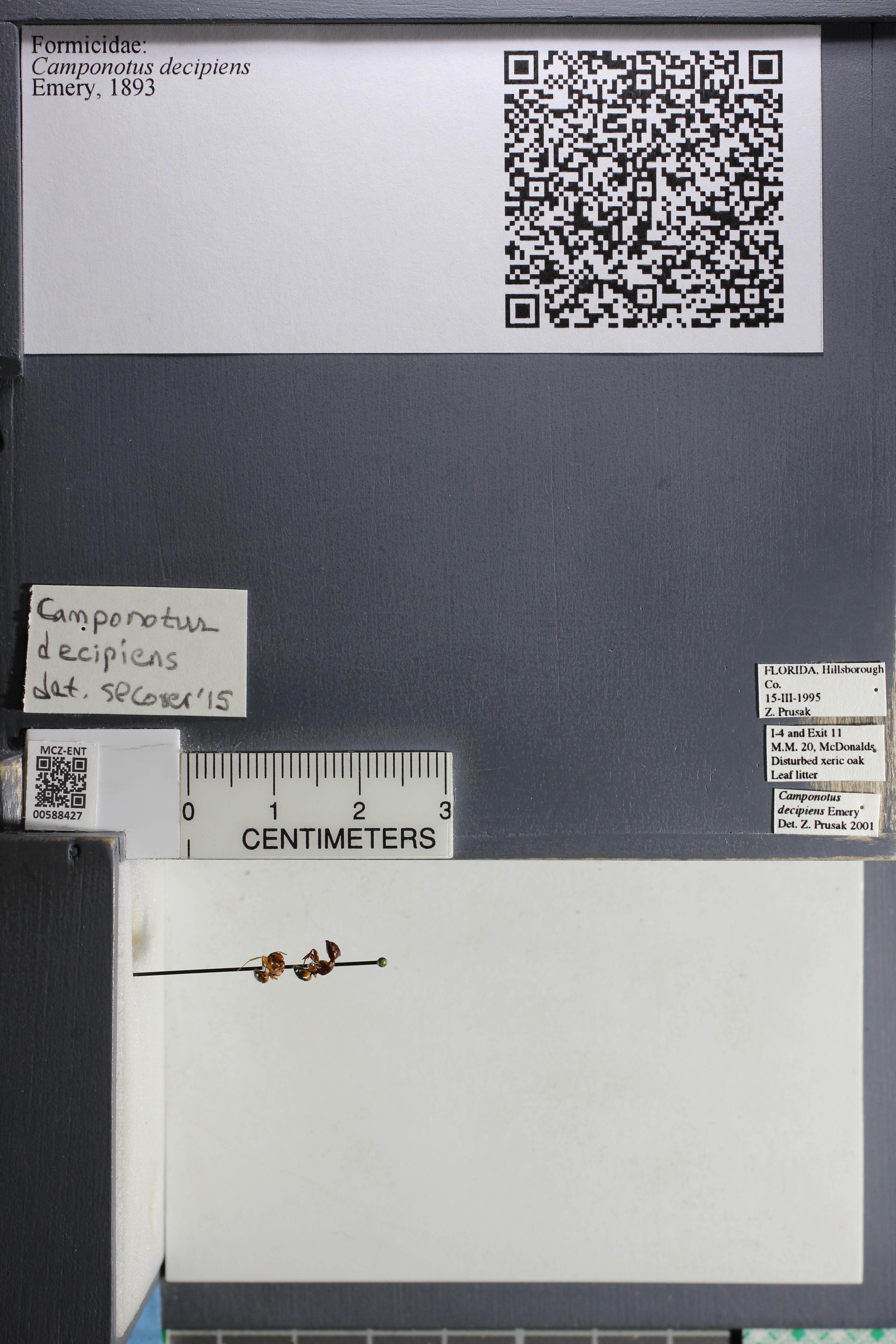 http://mczbase.mcz.harvard.edu/specimen_images/ent-formicidae/datashot/2015_11_23/IMG_340374.JPG