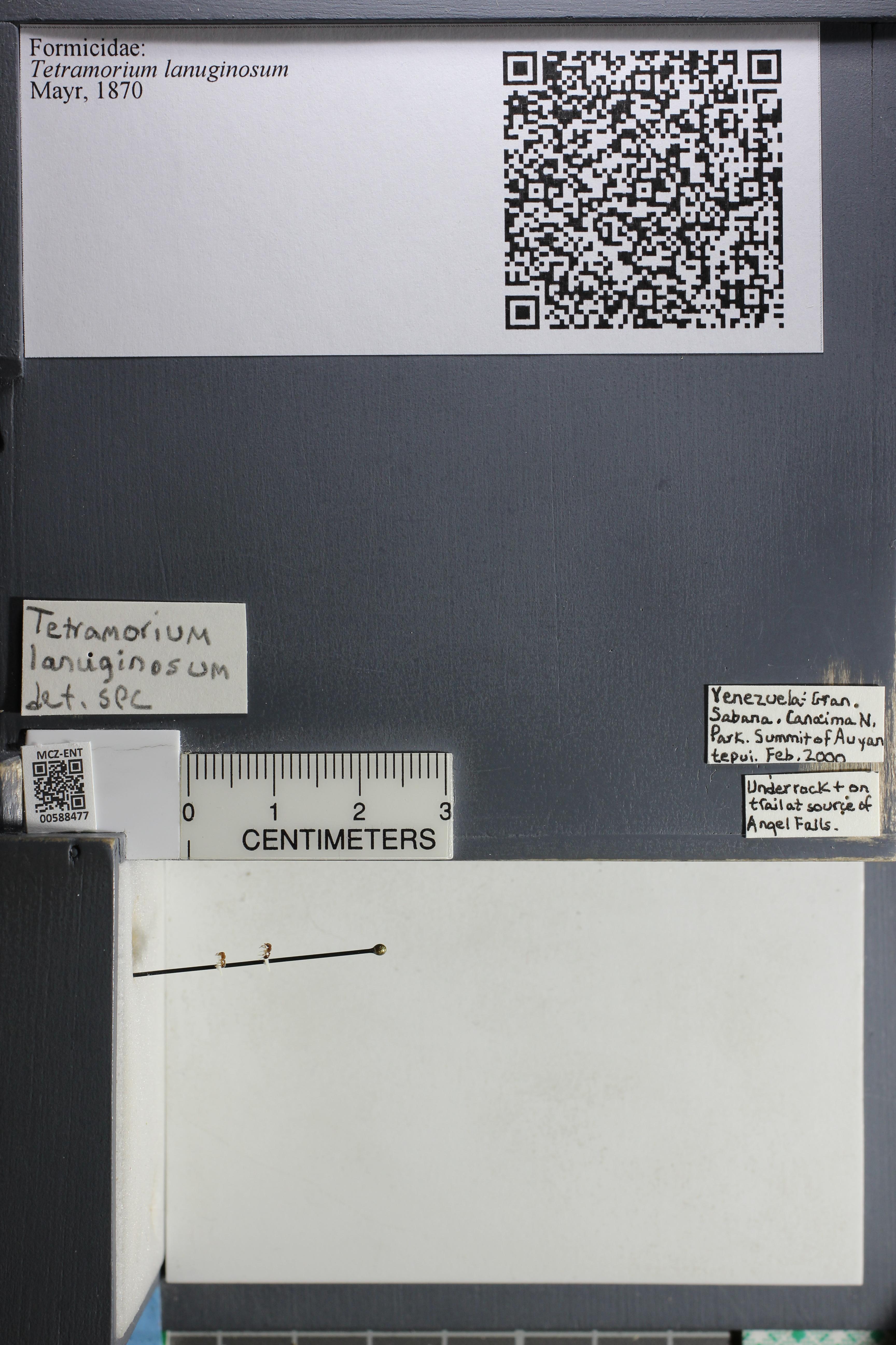 http://mczbase.mcz.harvard.edu/specimen_images/ent-formicidae/datashot/2015_11_23/IMG_340430.JPG