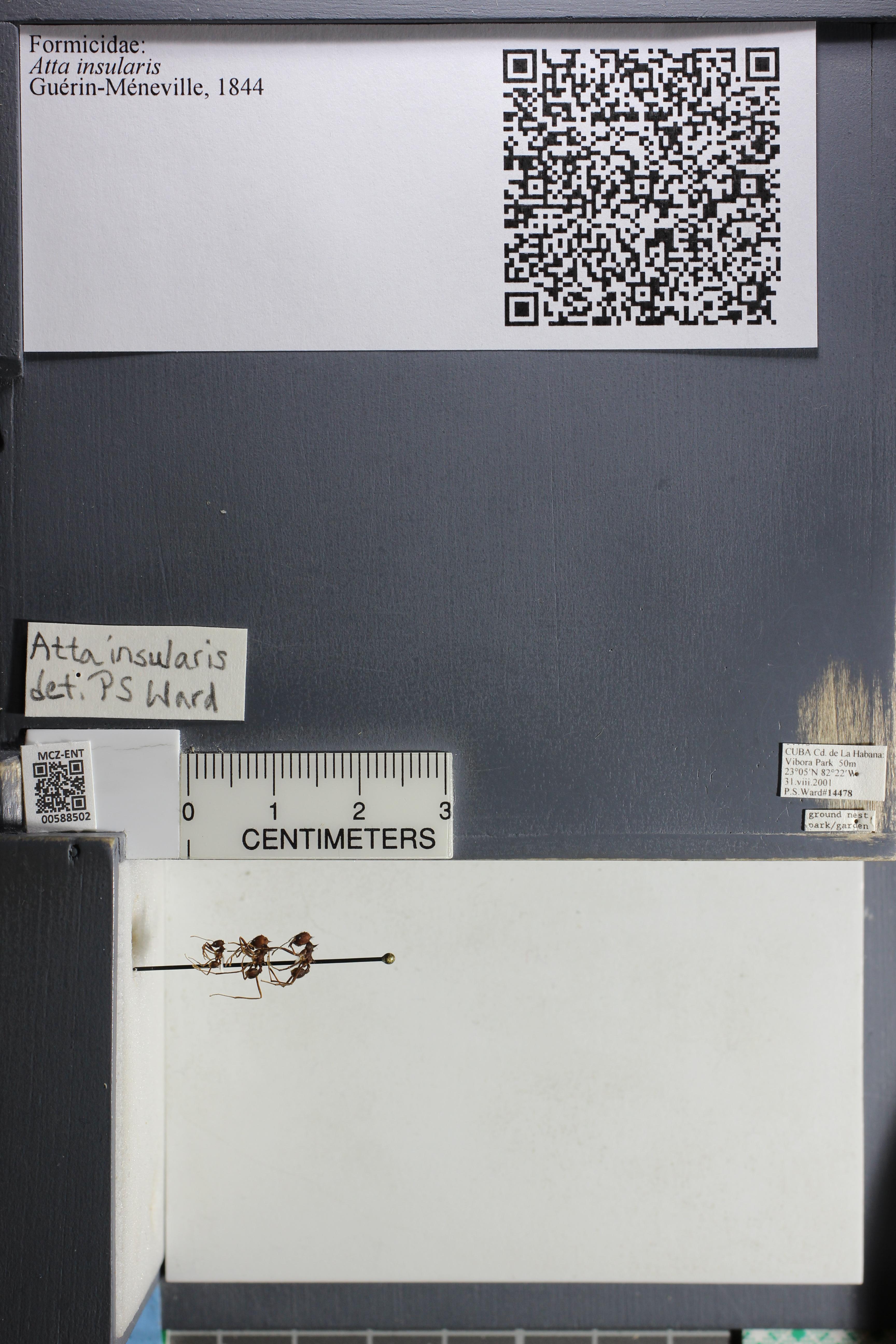 http://mczbase.mcz.harvard.edu/specimen_images/ent-formicidae/datashot/2015_11_24/IMG_340455.JPG