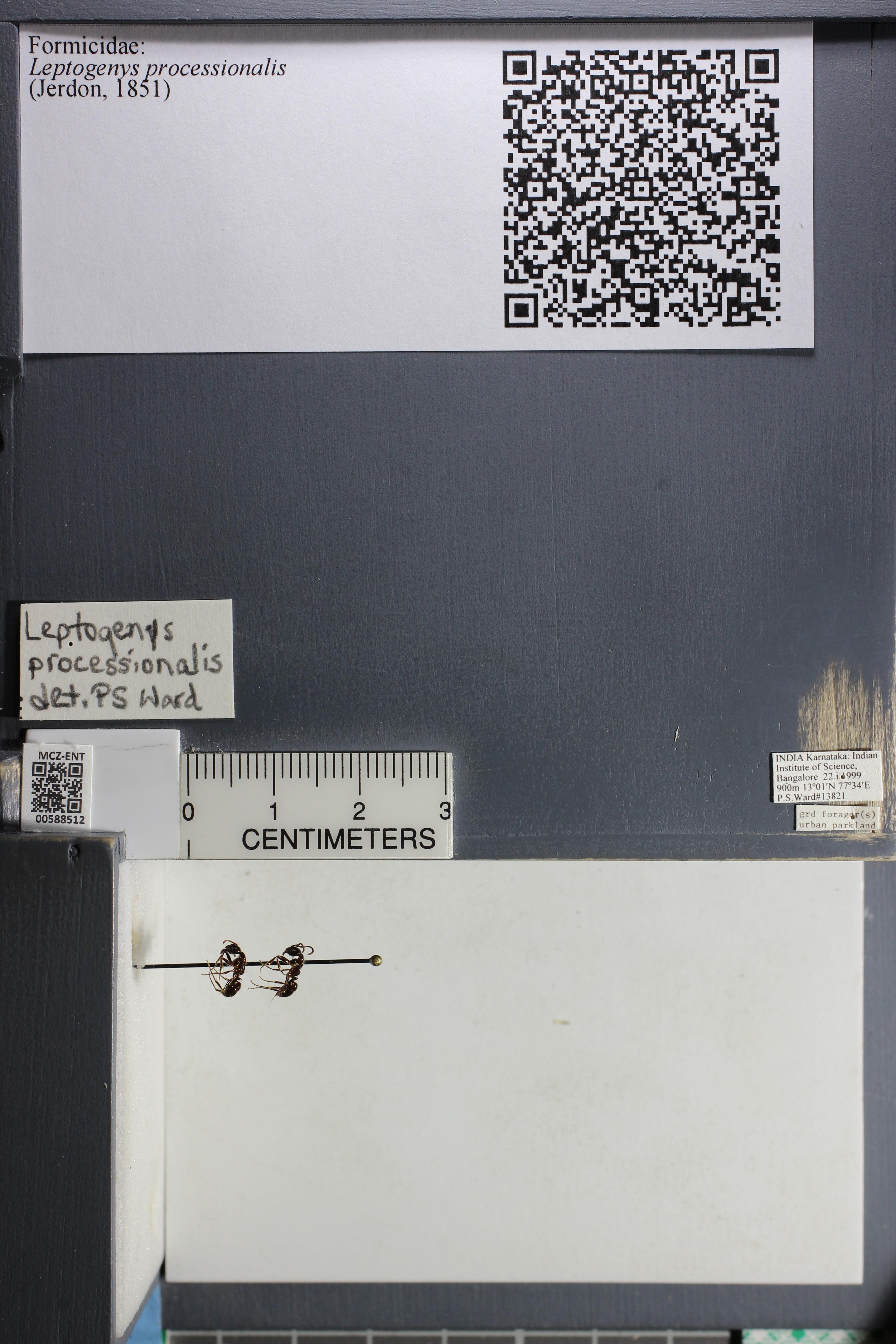 http://mczbase.mcz.harvard.edu/specimen_images/ent-formicidae/datashot/2015_11_24/IMG_340465.JPG