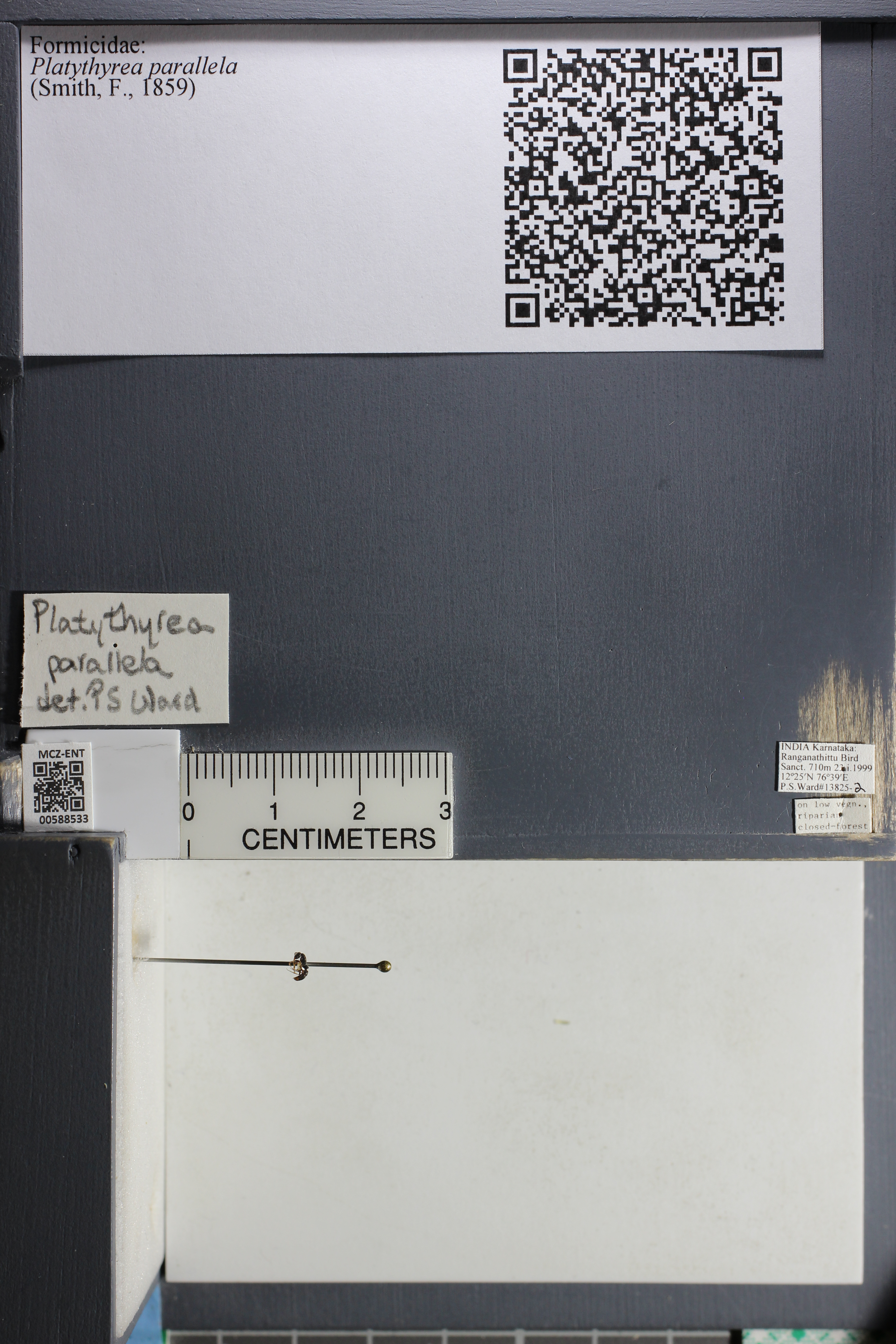 http://mczbase.mcz.harvard.edu/specimen_images/ent-formicidae/datashot/2015_11_24/IMG_340486.JPG