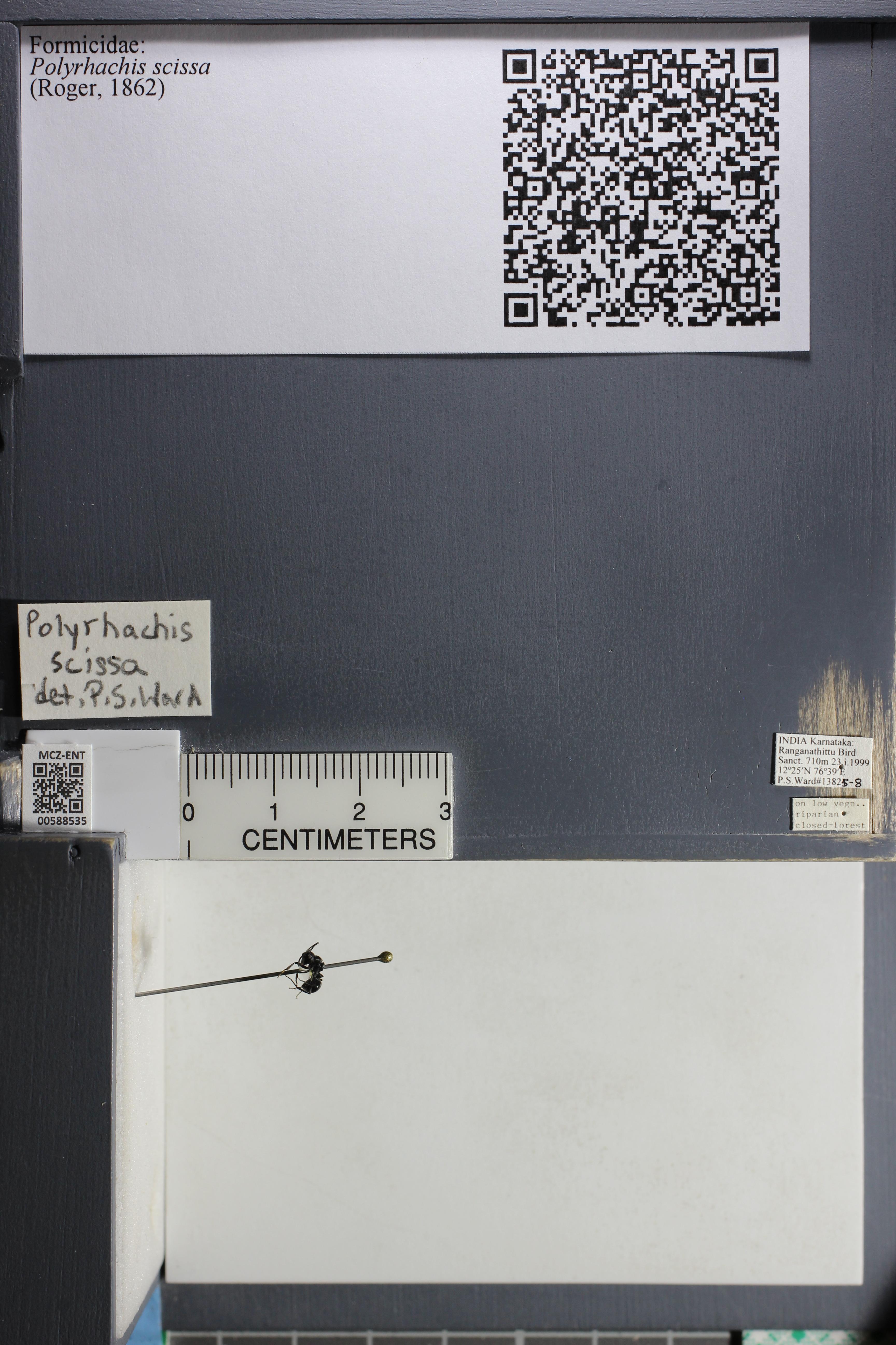 http://mczbase.mcz.harvard.edu/specimen_images/ent-formicidae/datashot/2015_11_24/IMG_340488.JPG