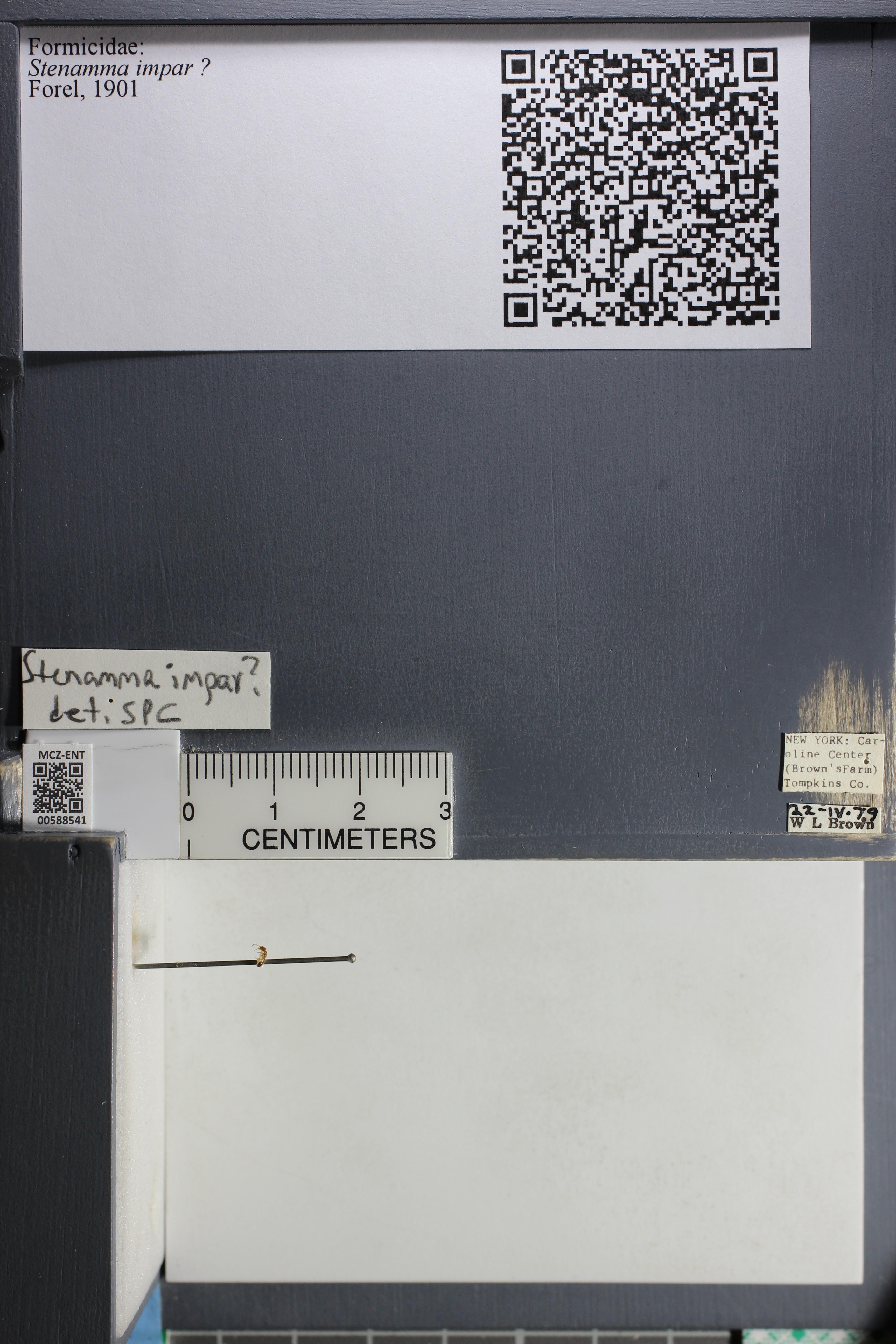 http://mczbase.mcz.harvard.edu/specimen_images/ent-formicidae/datashot/2015_11_24/IMG_340494.JPG