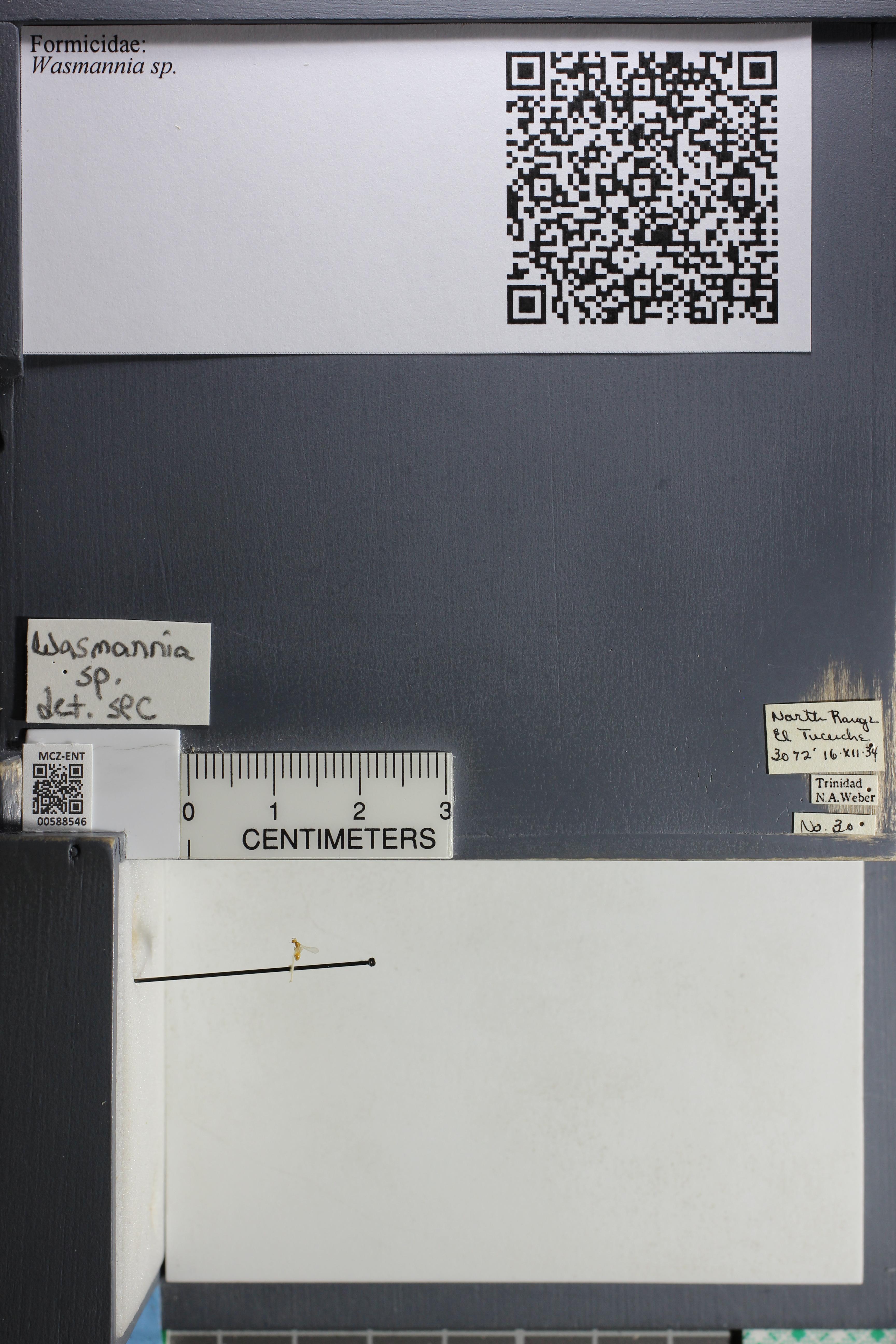 http://mczbase.mcz.harvard.edu/specimen_images/ent-formicidae/datashot/2015_11_24/IMG_340501.JPG