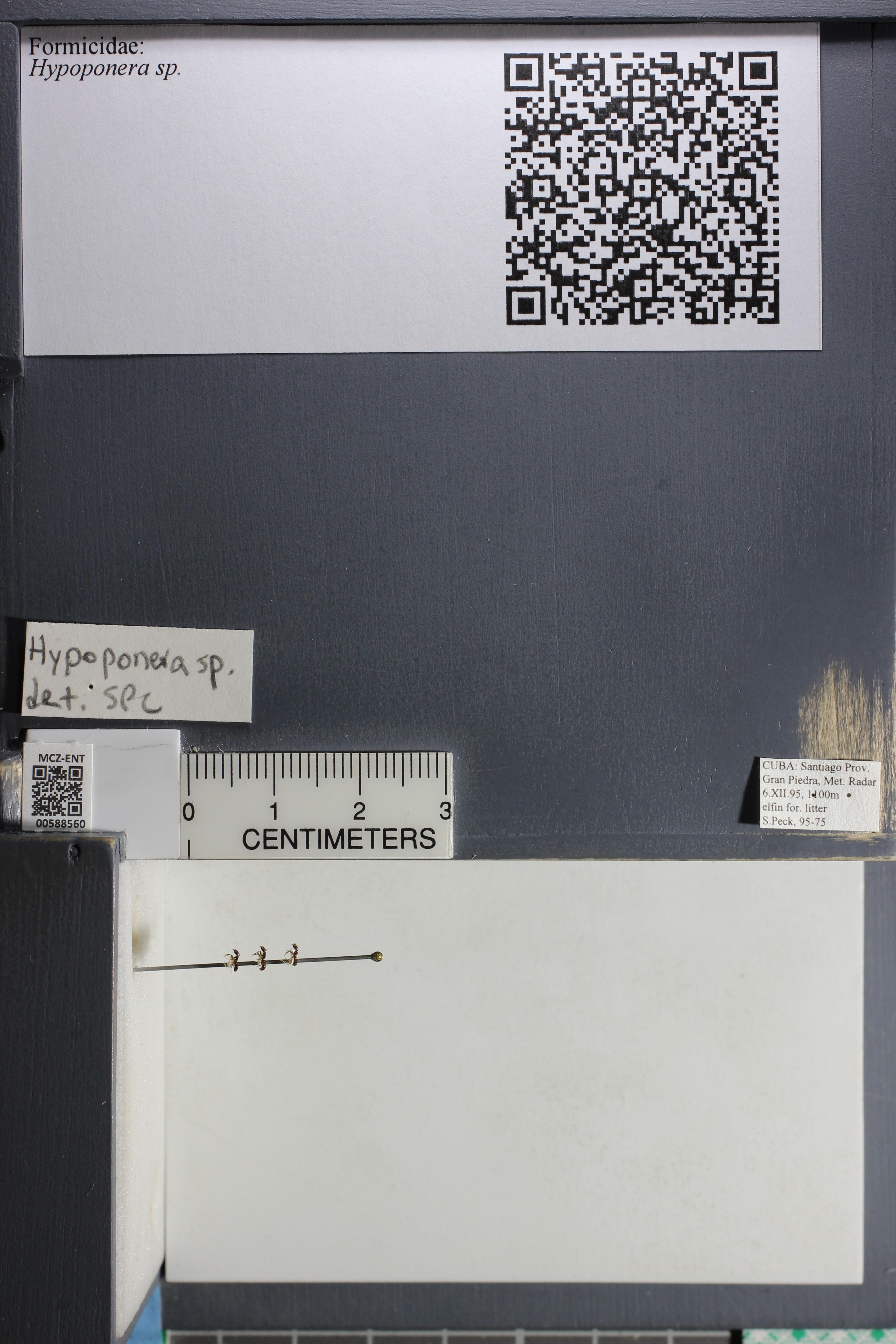 http://mczbase.mcz.harvard.edu/specimen_images/ent-formicidae/datashot/2015_11_24/IMG_340515.JPG