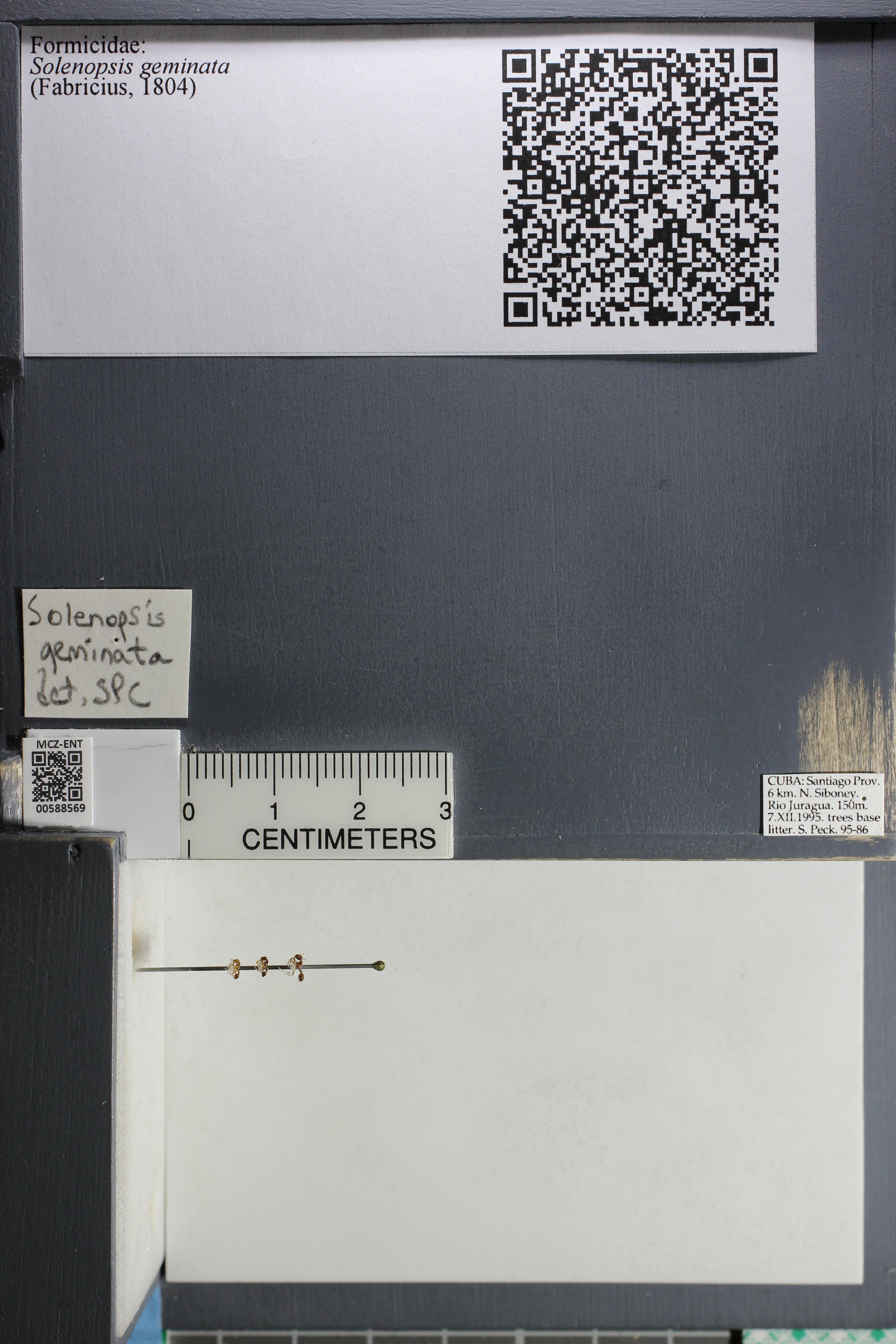 http://mczbase.mcz.harvard.edu/specimen_images/ent-formicidae/datashot/2015_11_24/IMG_340526.JPG