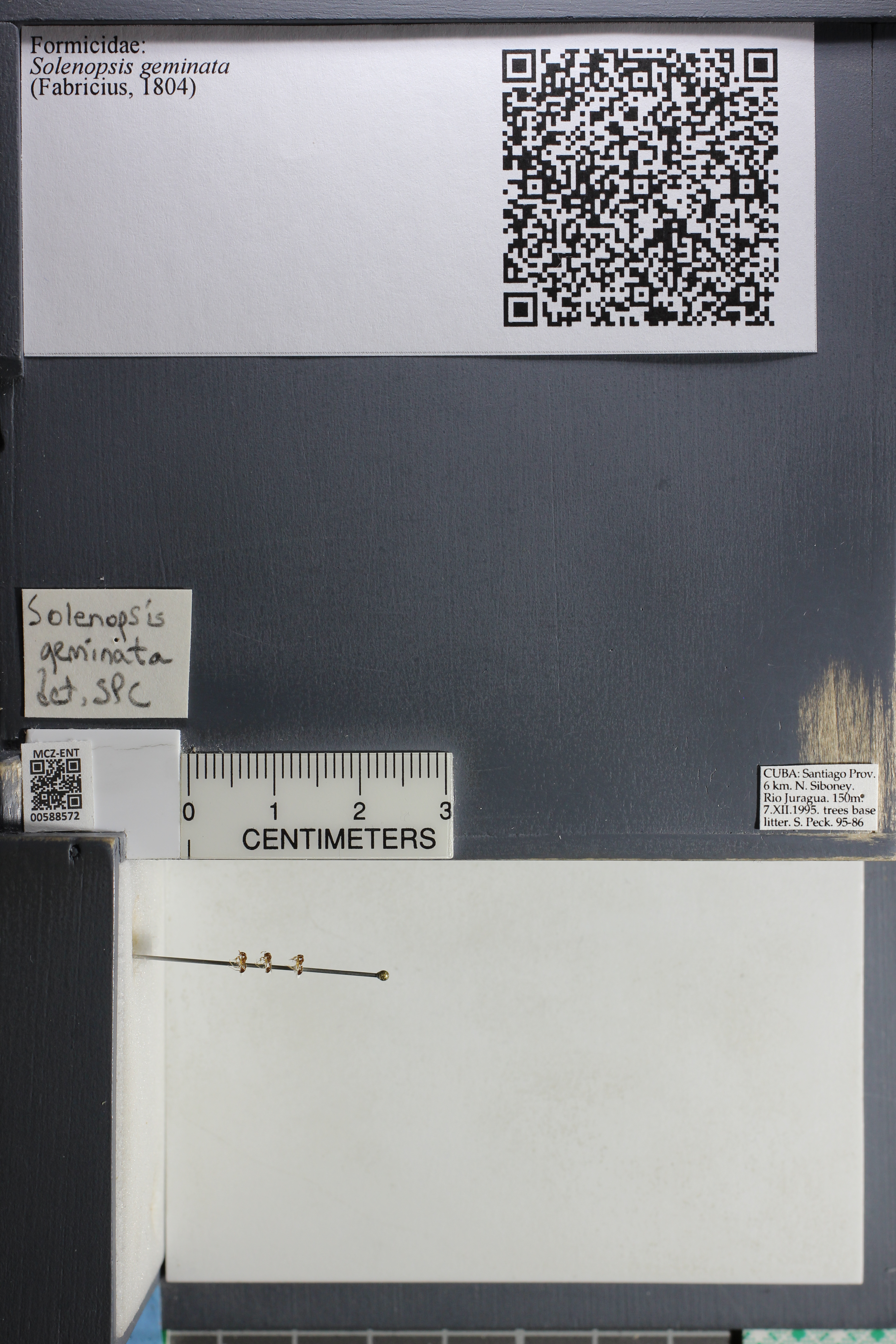 http://mczbase.mcz.harvard.edu/specimen_images/ent-formicidae/datashot/2015_11_24/IMG_340529.JPG