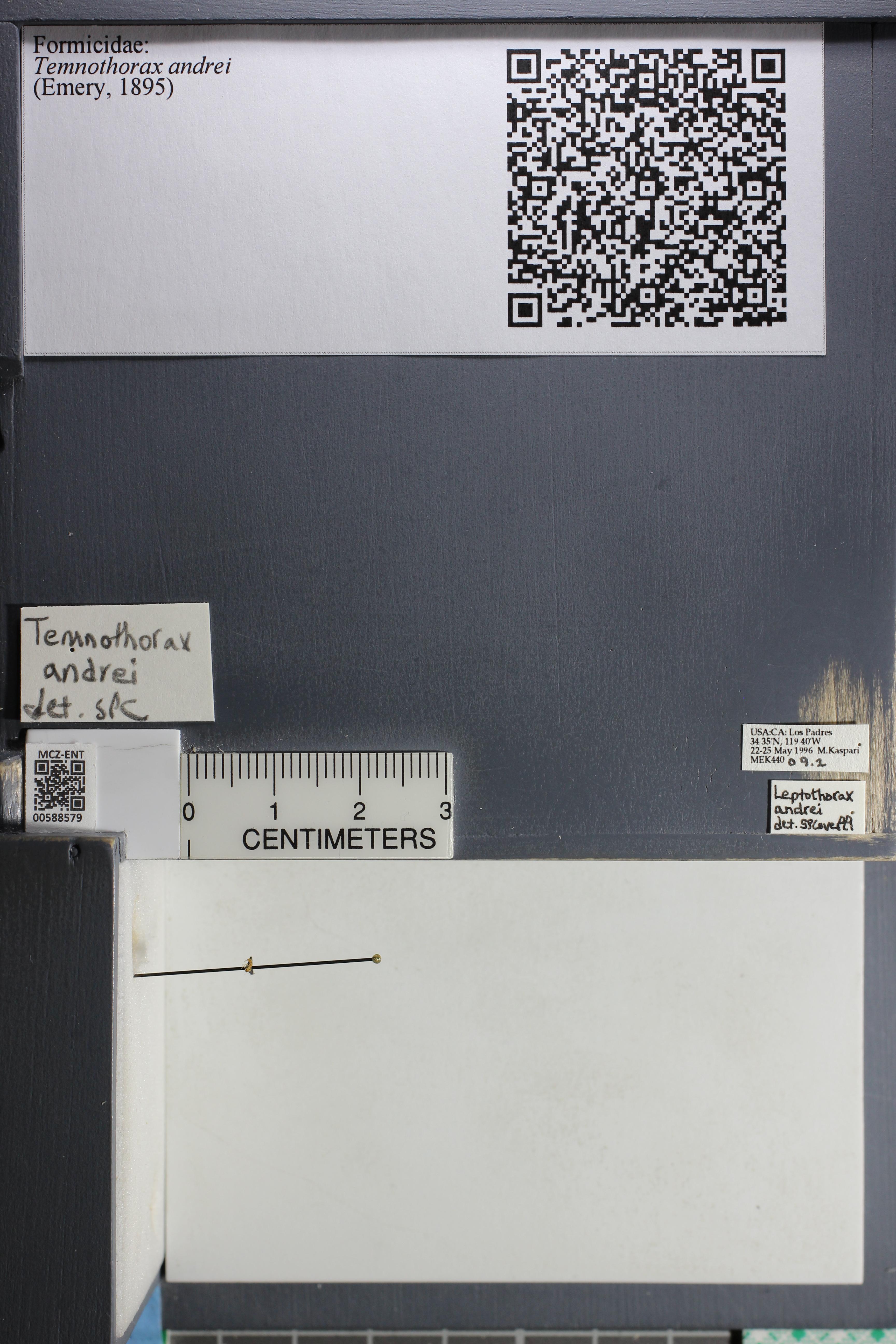 http://mczbase.mcz.harvard.edu/specimen_images/ent-formicidae/datashot/2015_11_24/IMG_340536.JPG