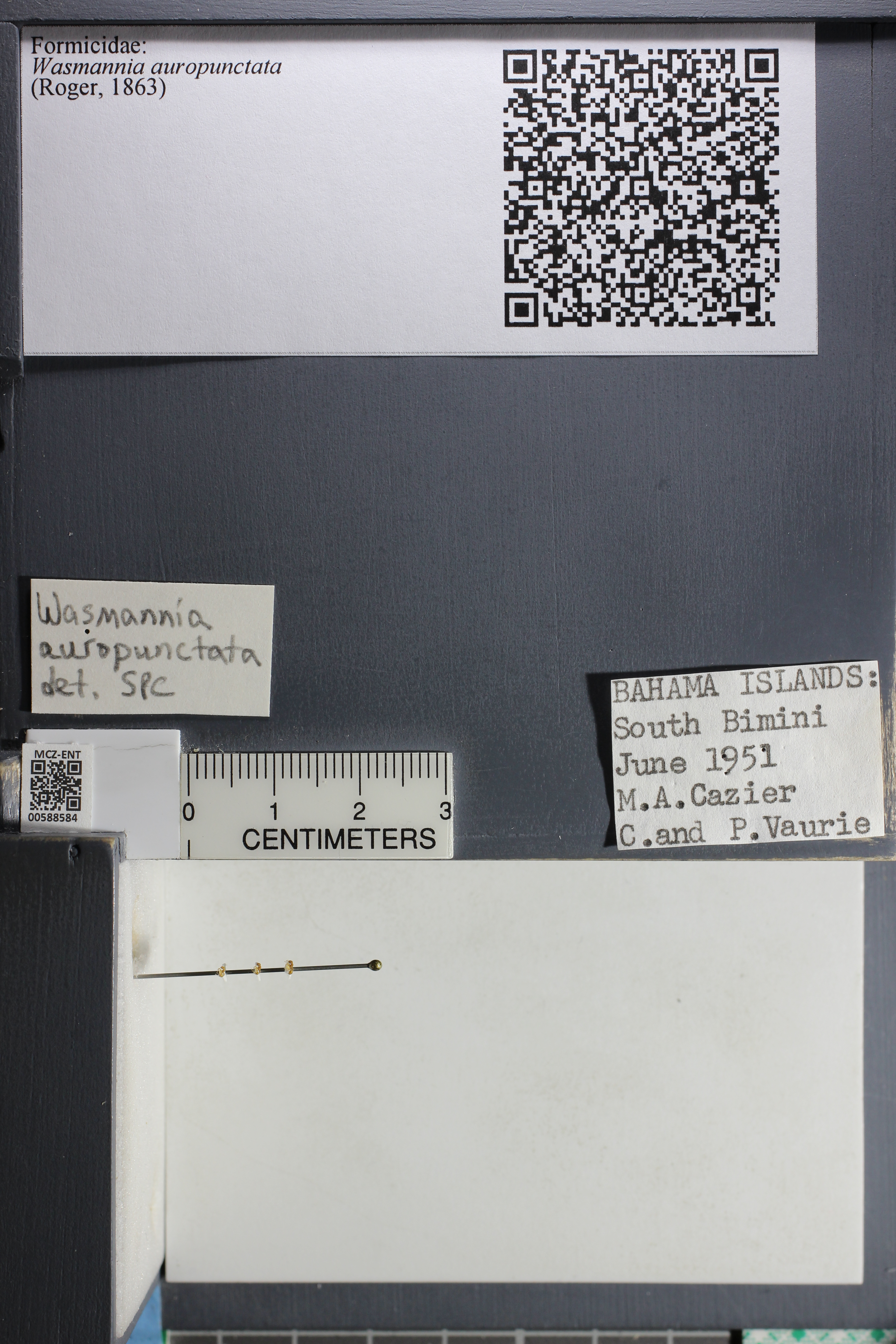 http://mczbase.mcz.harvard.edu/specimen_images/ent-formicidae/datashot/2015_11_24/IMG_340542.JPG
