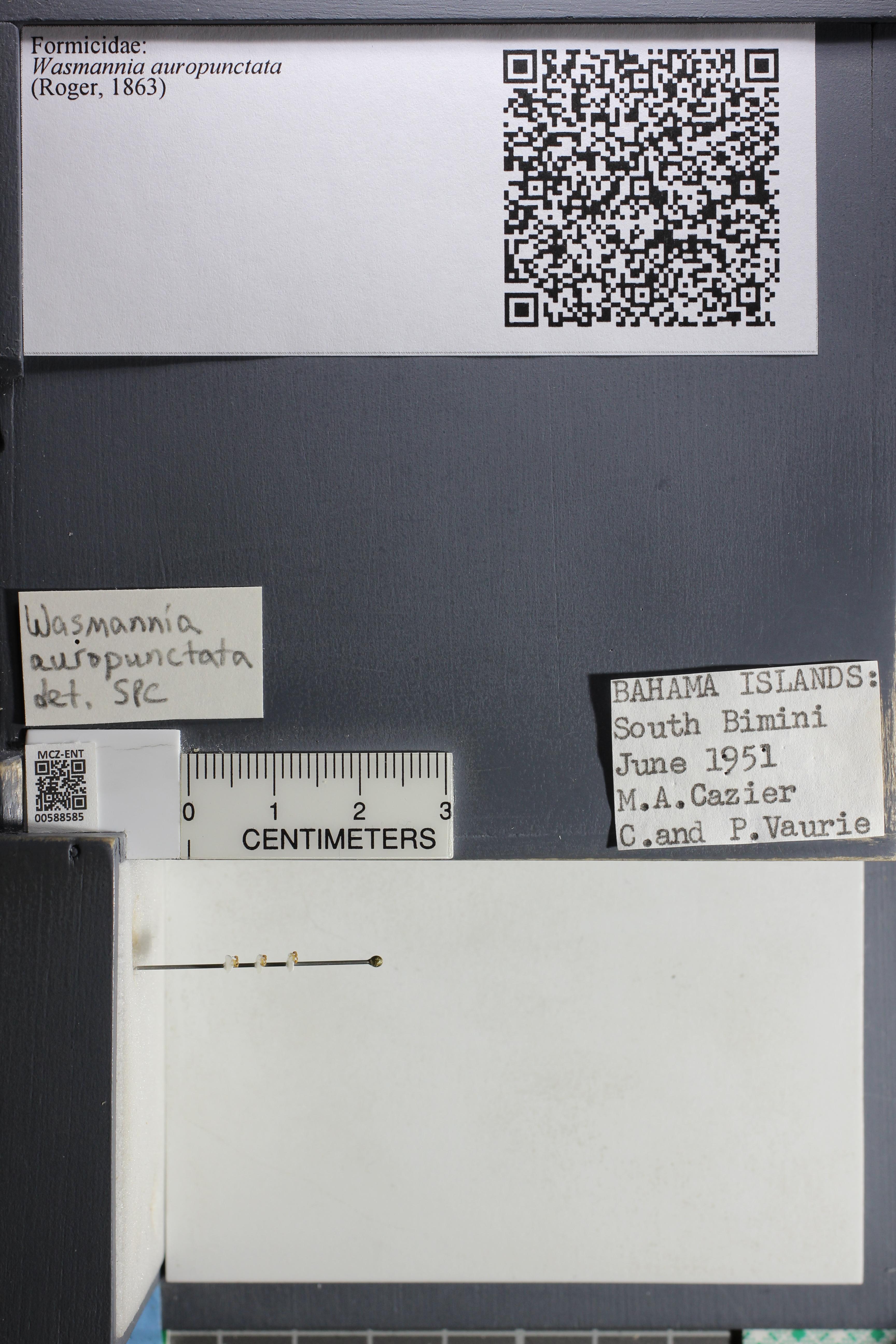 http://mczbase.mcz.harvard.edu/specimen_images/ent-formicidae/datashot/2015_11_24/IMG_340543.JPG