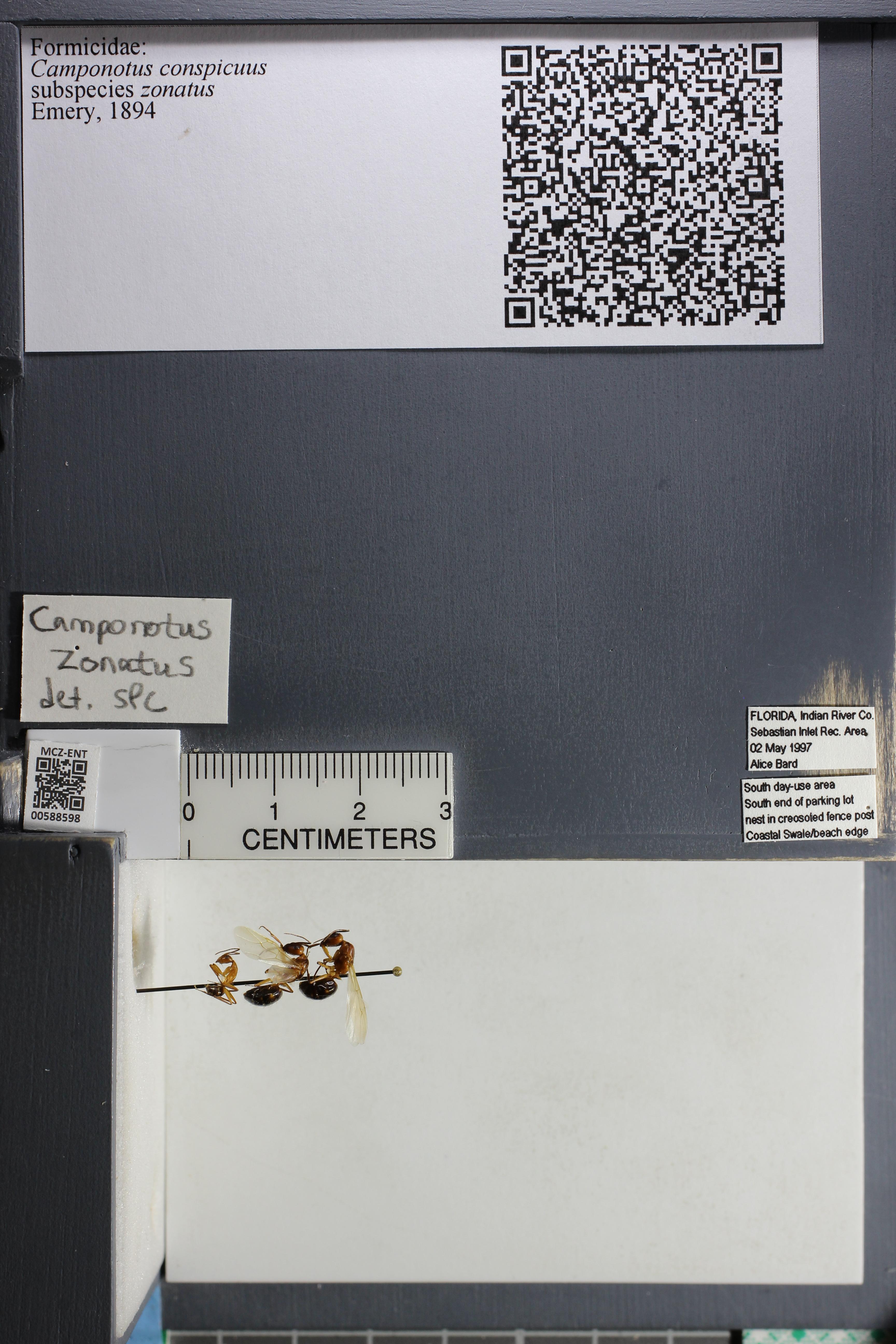 http://mczbase.mcz.harvard.edu/specimen_images/ent-formicidae/datashot/2015_11_24/IMG_340556.JPG