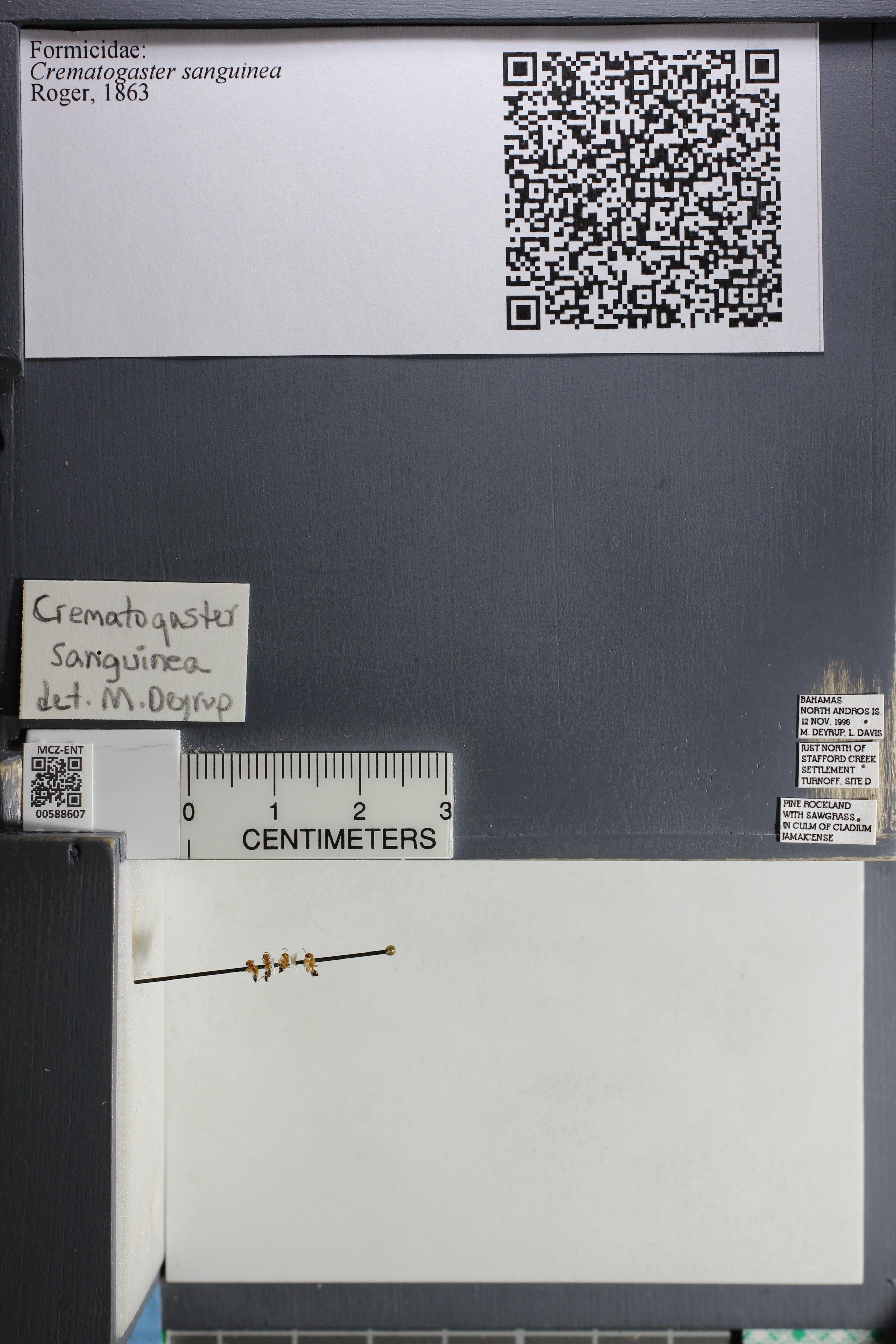 http://mczbase.mcz.harvard.edu/specimen_images/ent-formicidae/datashot/2015_11_24/IMG_340565.JPG