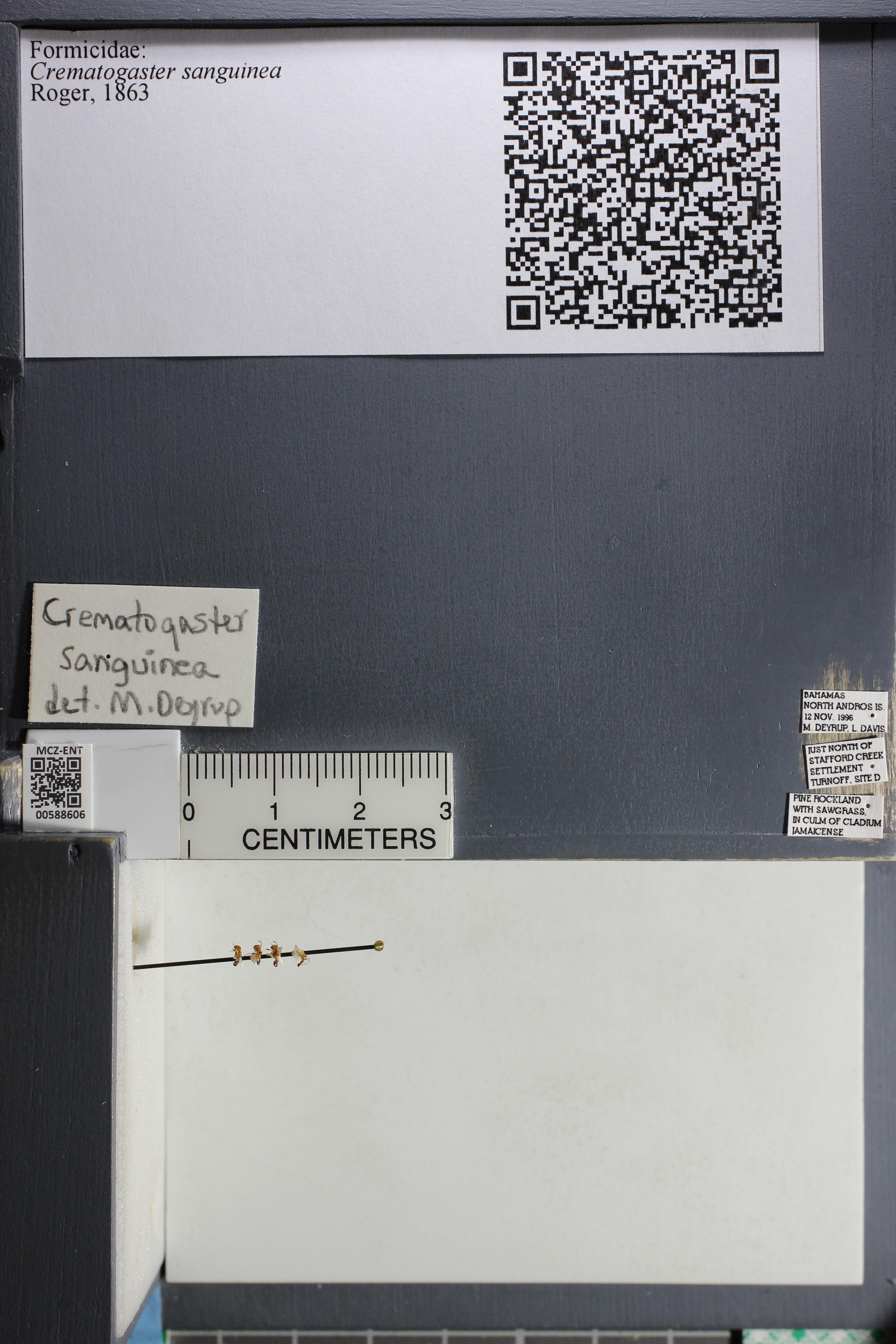 http://mczbase.mcz.harvard.edu/specimen_images/ent-formicidae/datashot/2015_11_24/IMG_340566.JPG