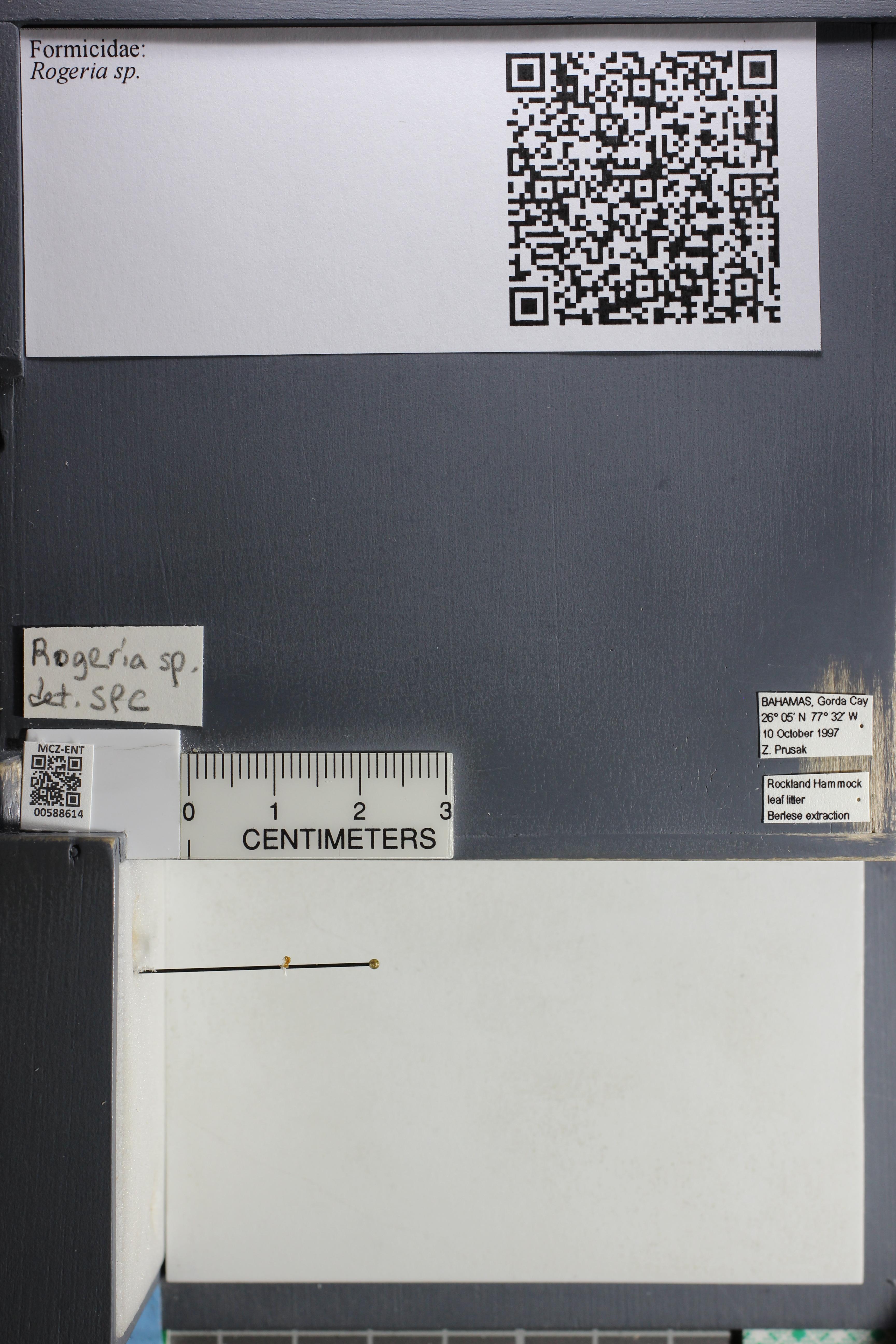http://mczbase.mcz.harvard.edu/specimen_images/ent-formicidae/datashot/2015_11_24/IMG_340574.JPG